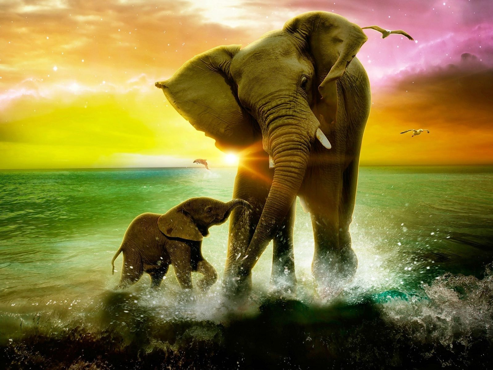 Cool Elephant Wallpapers Top Free Cool Elephant