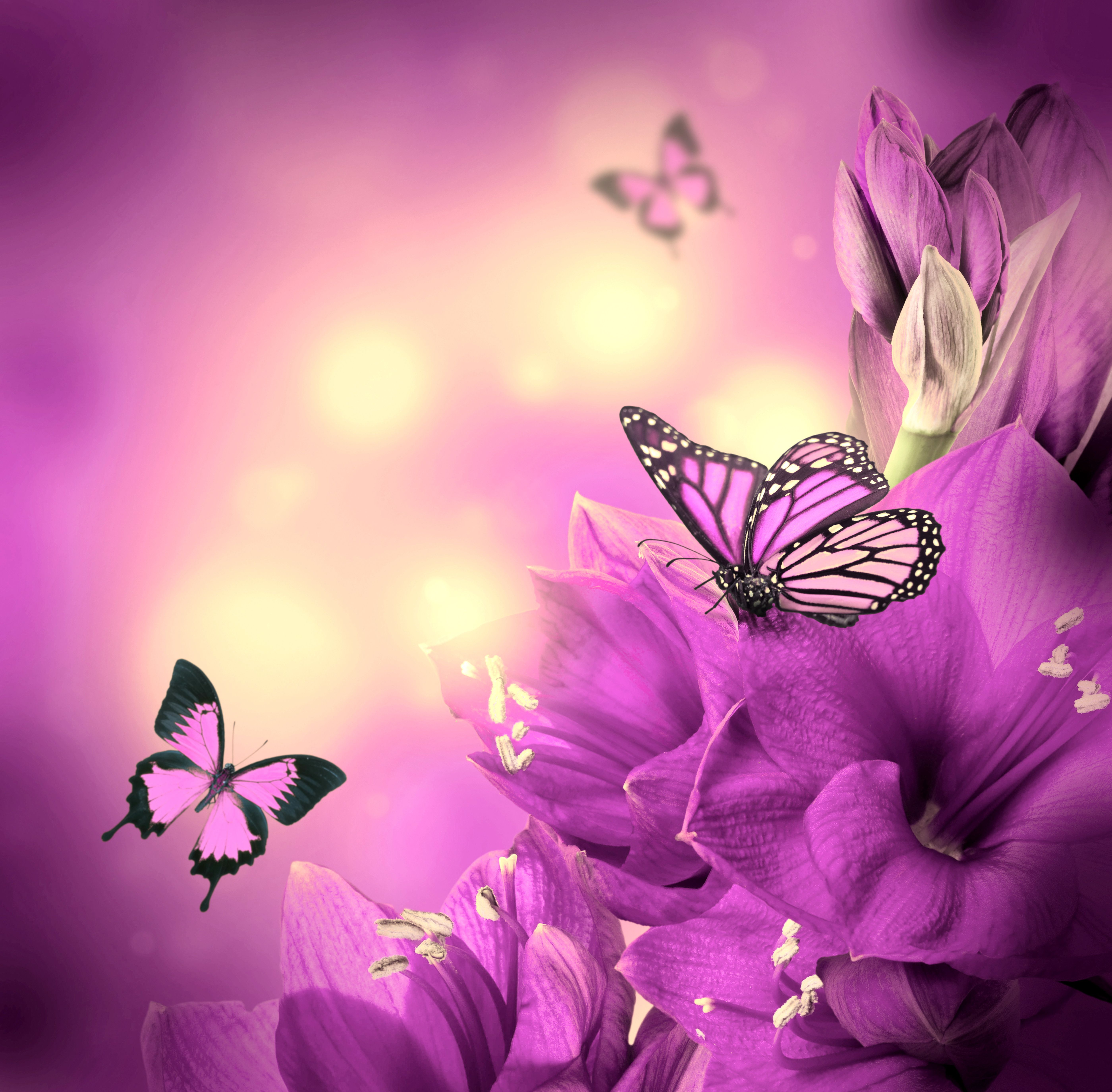 Purple Flowers and Butterflies Wallpapers - Top Free ...