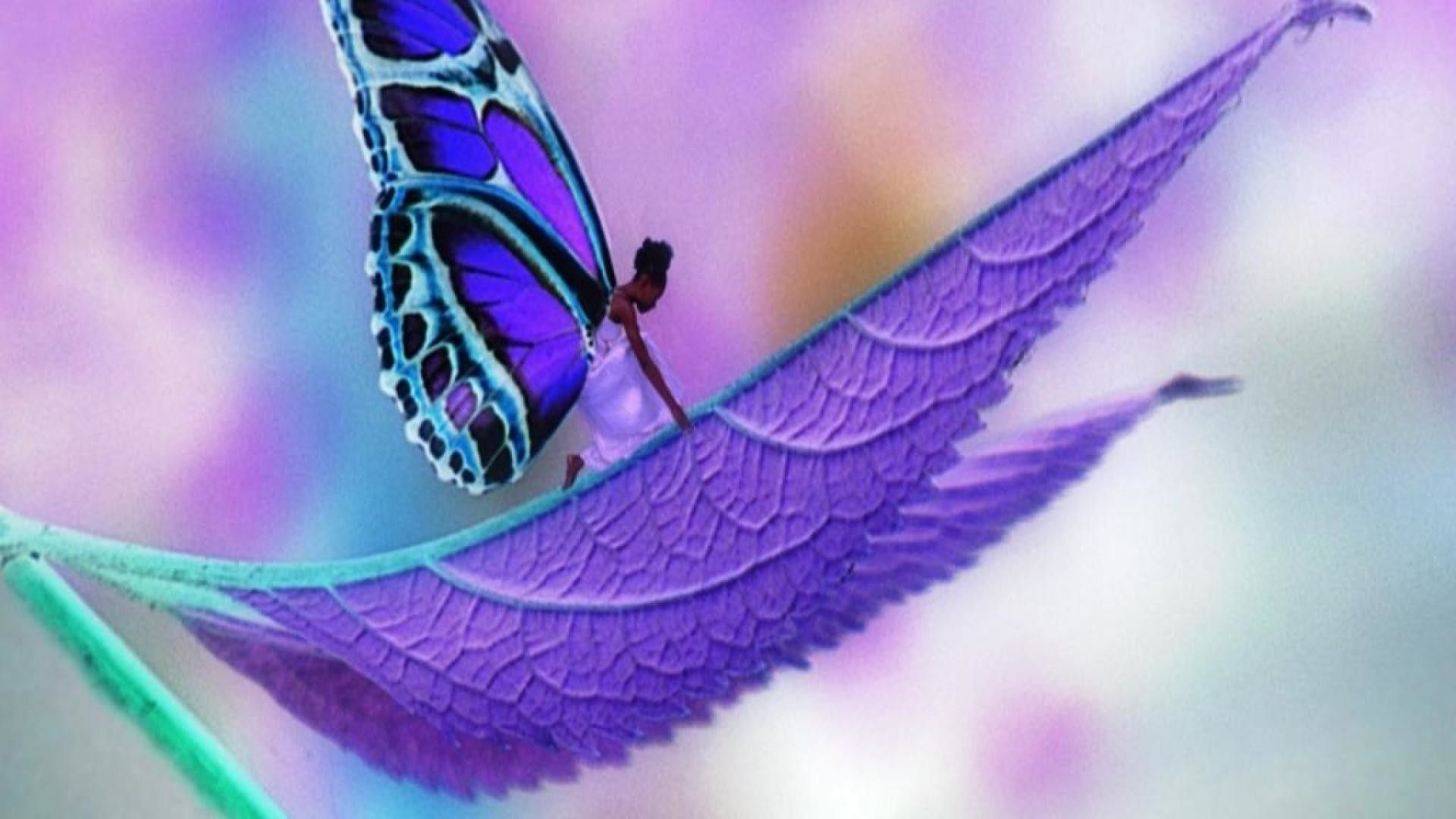45 Best Free Purple Butterfly Wallpapers Wallpaperaccess