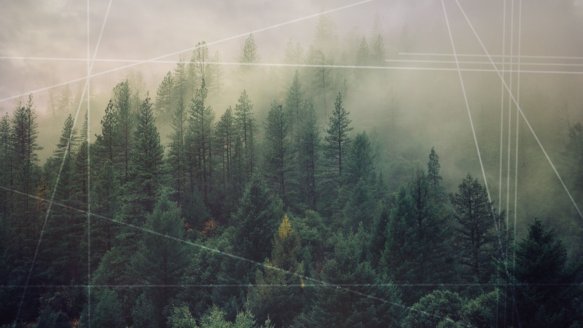 hipster forest wallpapers top free hipster forest