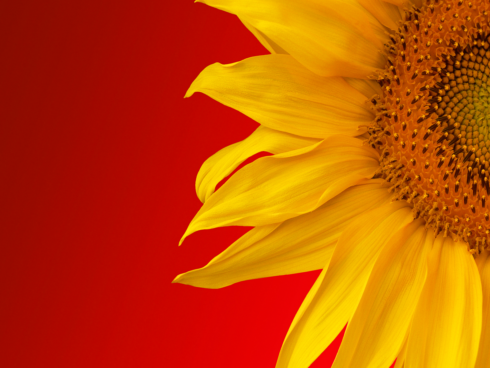 Abstract Sunflower Wallpapers Top Free Abstract Sunflower Backgrounds Wallpaperaccess