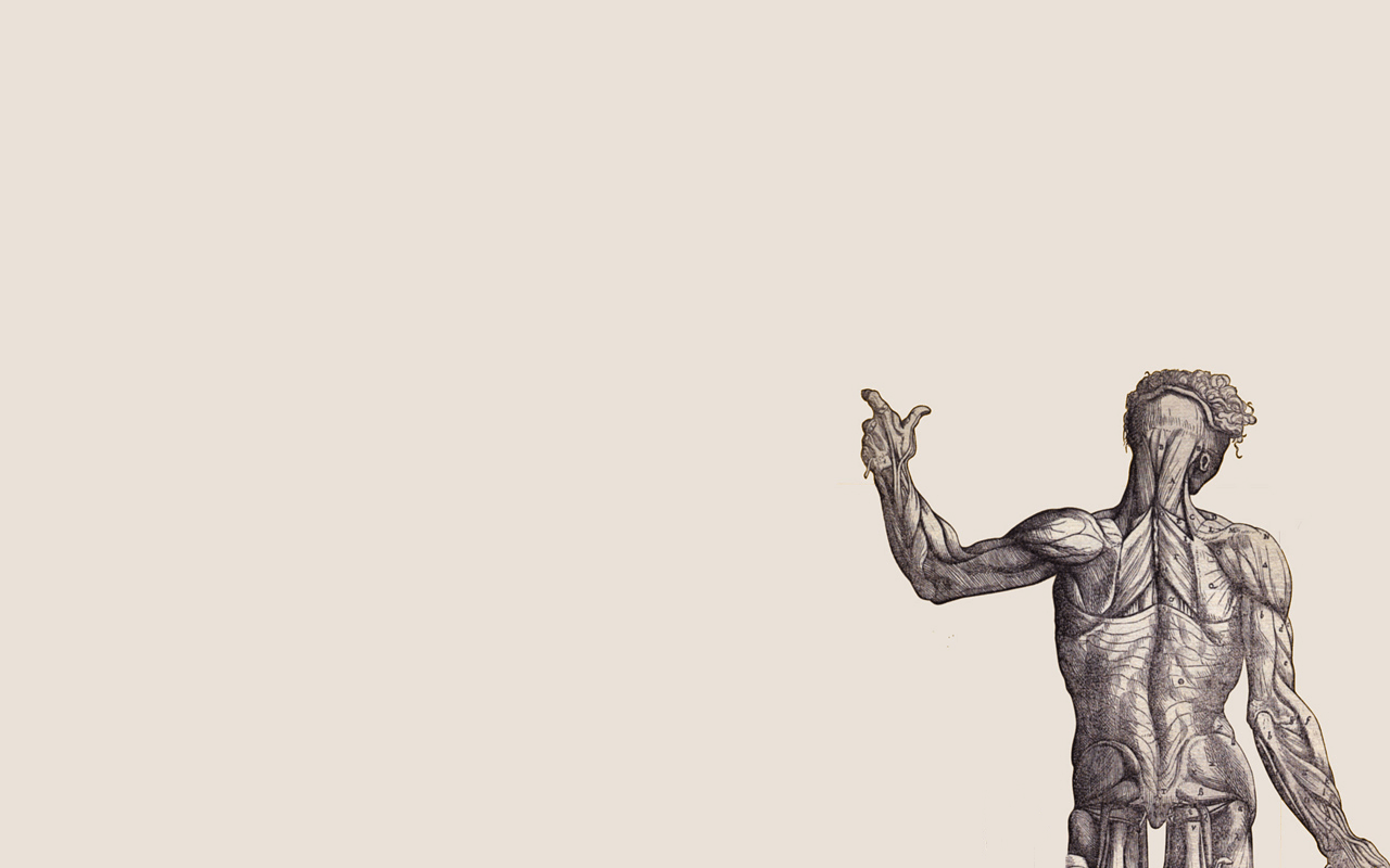 Human Anatomy Wallpapers Top Free Human Anatomy Backgrounds Wallpaperaccess