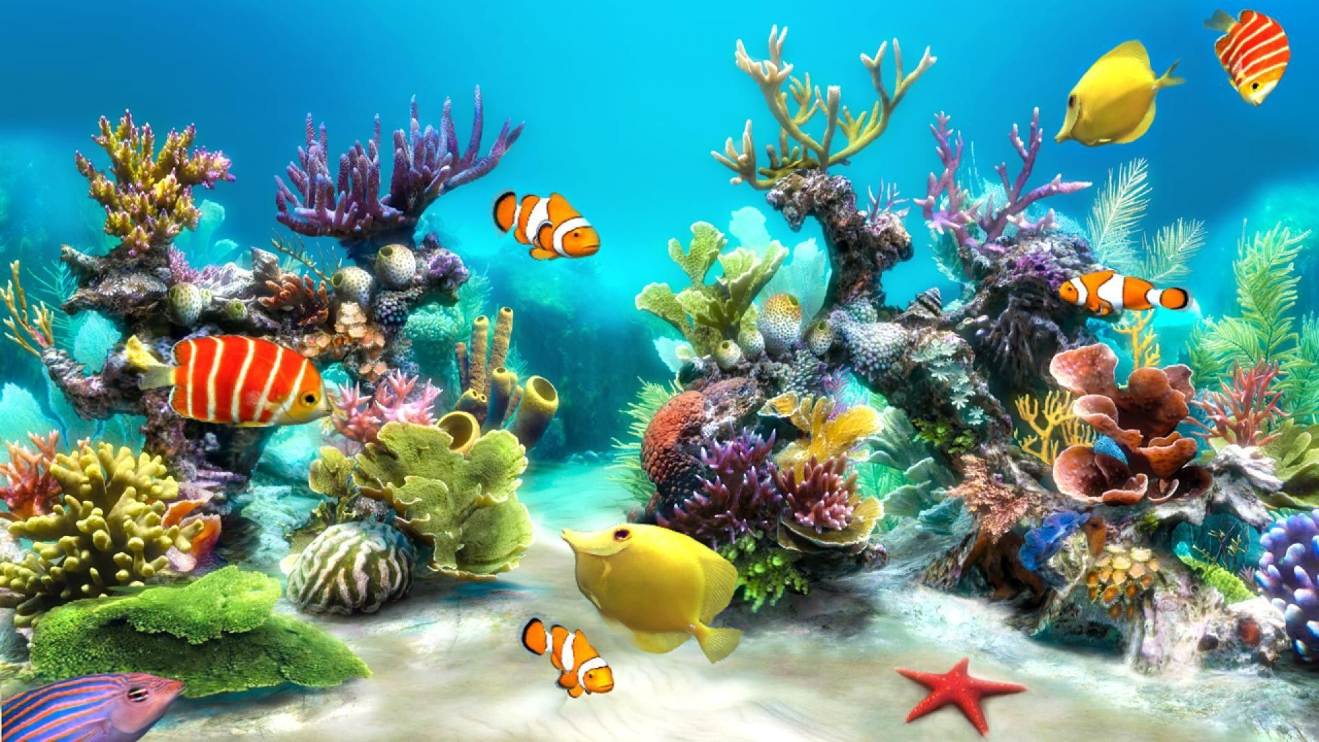 Fish Tank Wallpapers Top Free Fish Tank Backgrounds