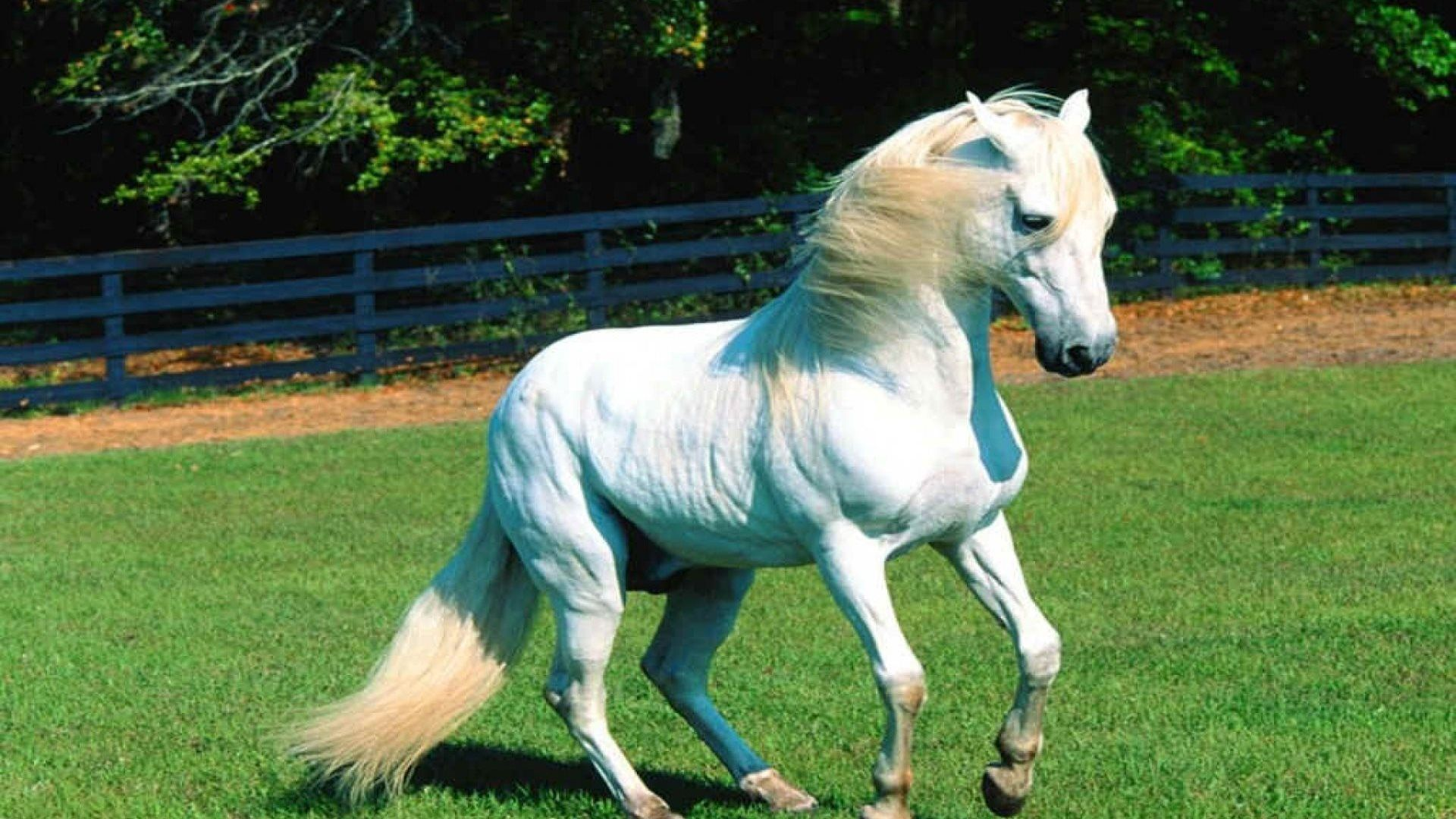 Real Unicorn Wallpapers - Top Free Real Unicorn ...