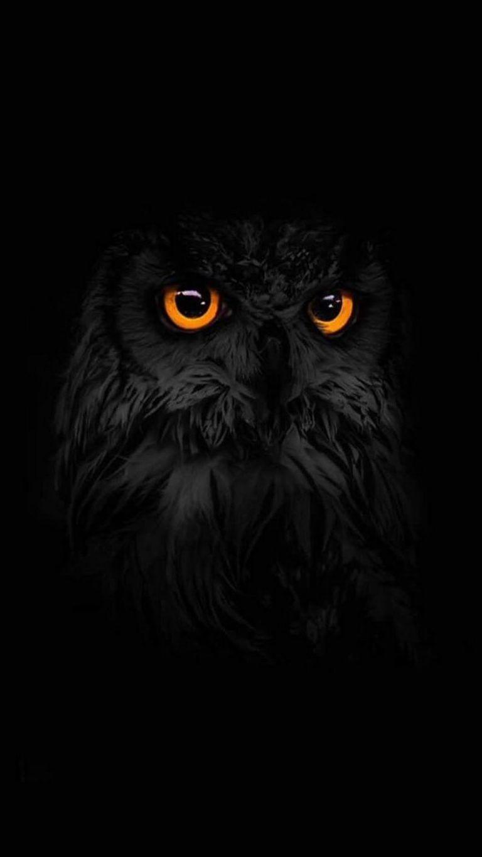 Dark Owl Wallpapers Top Free Dark Owl Backgrounds Wallpaperaccess