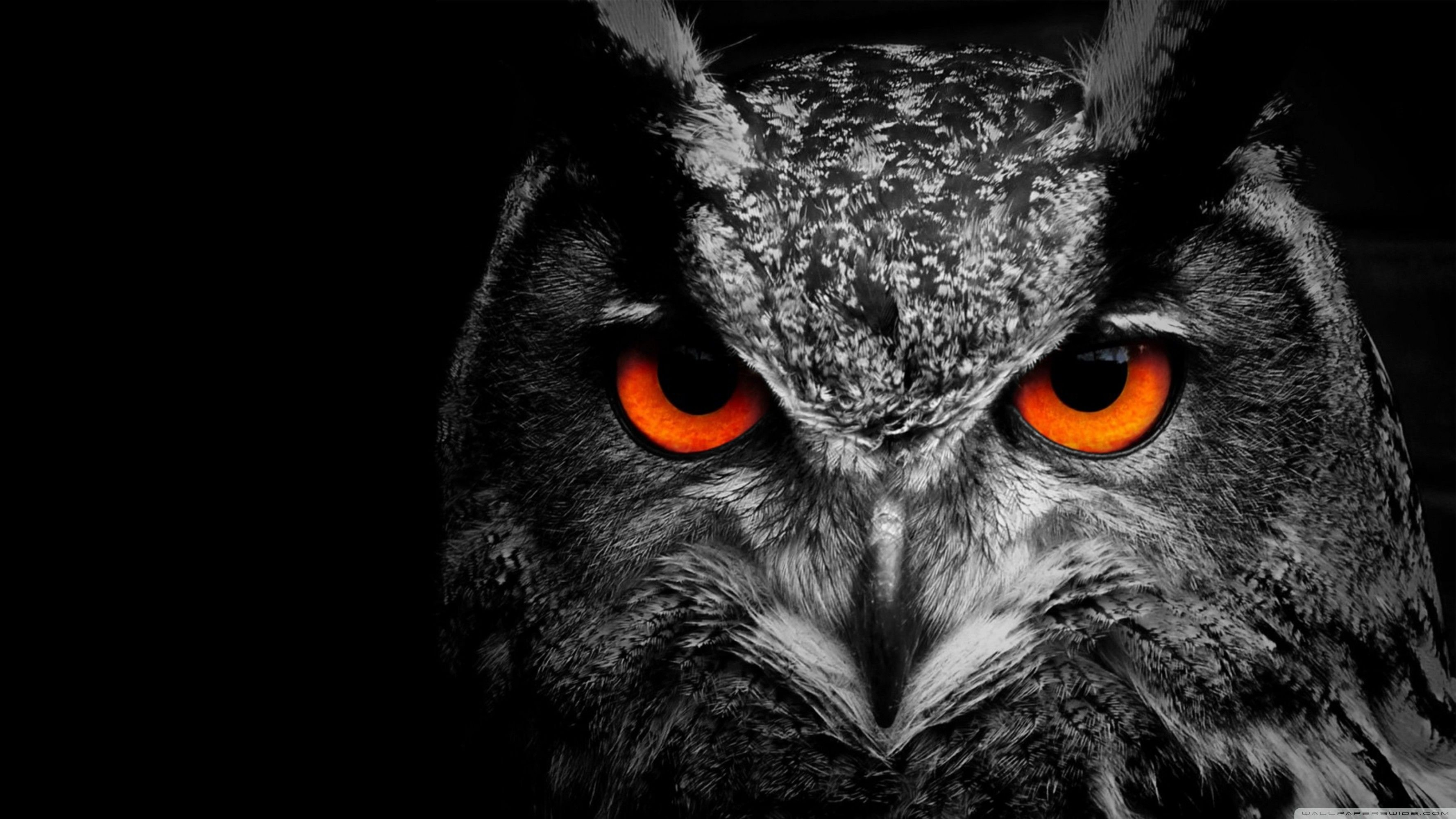 Black Owl Wallpapers Top Free Black Owl Backgrounds Wallpaperaccess