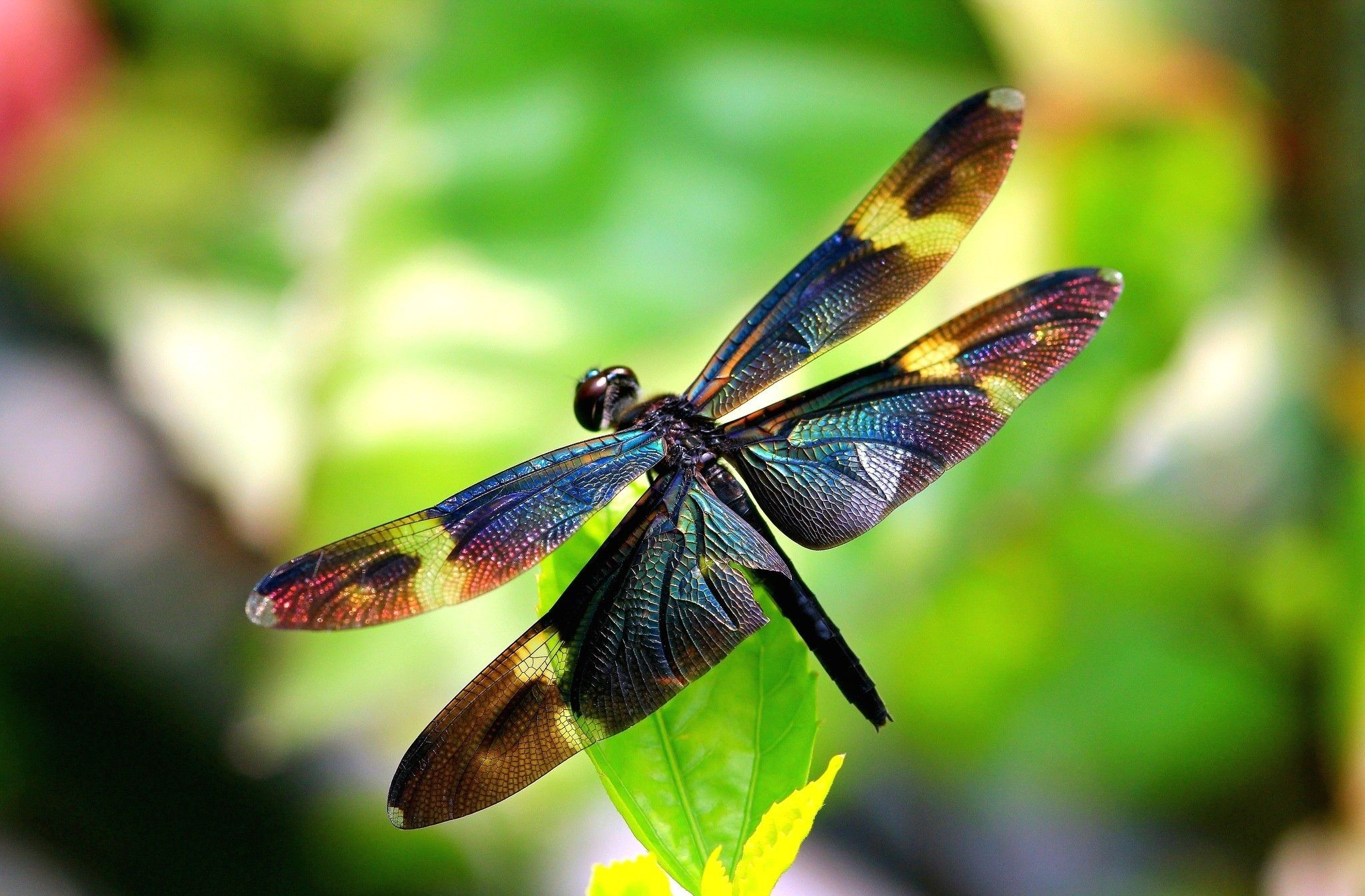 Dragonfly Wallpapers Top Free Dragonfly Backgrounds Wallpaperaccess