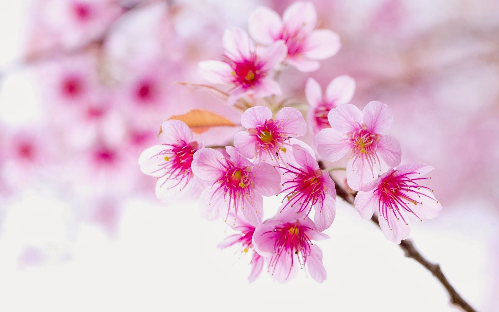 69 Best Free Cute Pink Flower Wallpapers Wallpaperaccess