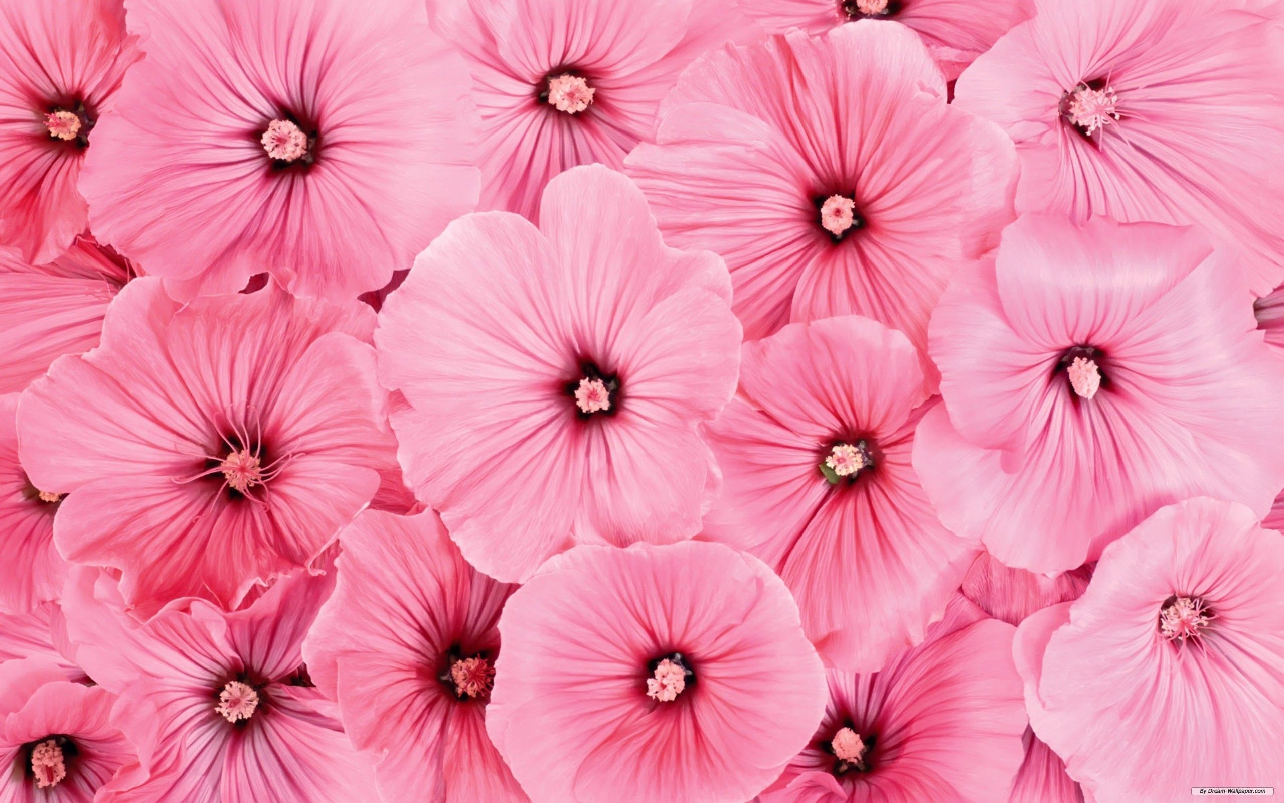 Cute Pink Flower Wallpapers Top Free Cute Pink Flower