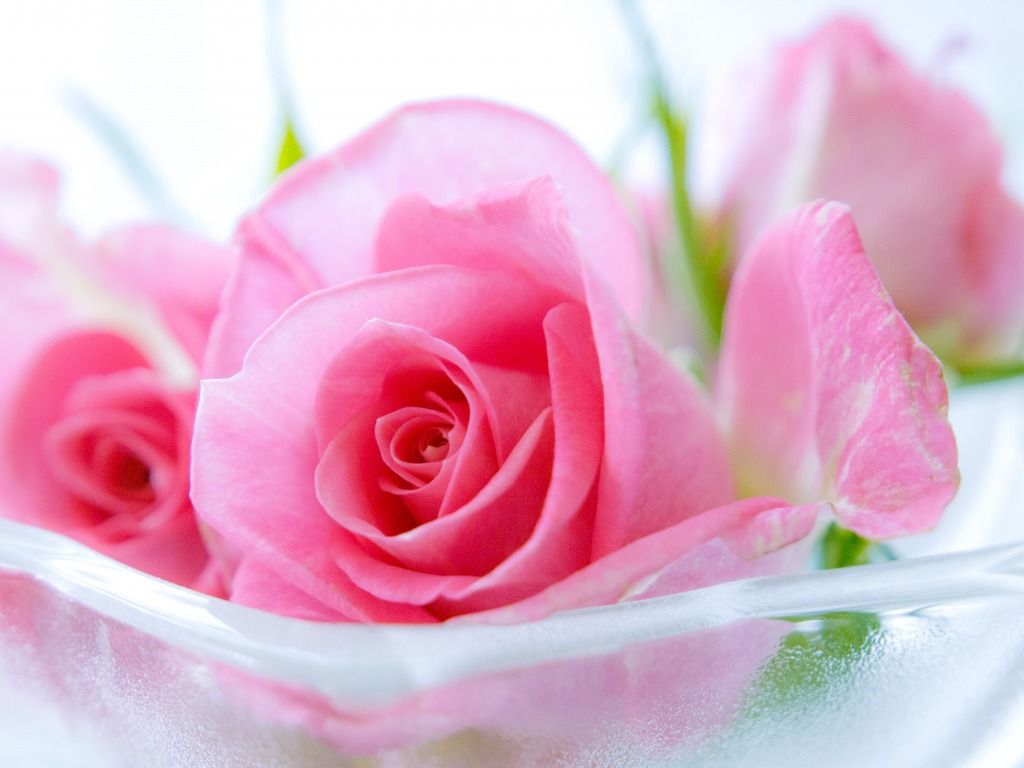 69 Best Free Cute Pink Flower Wallpapers Wallpaperaccess