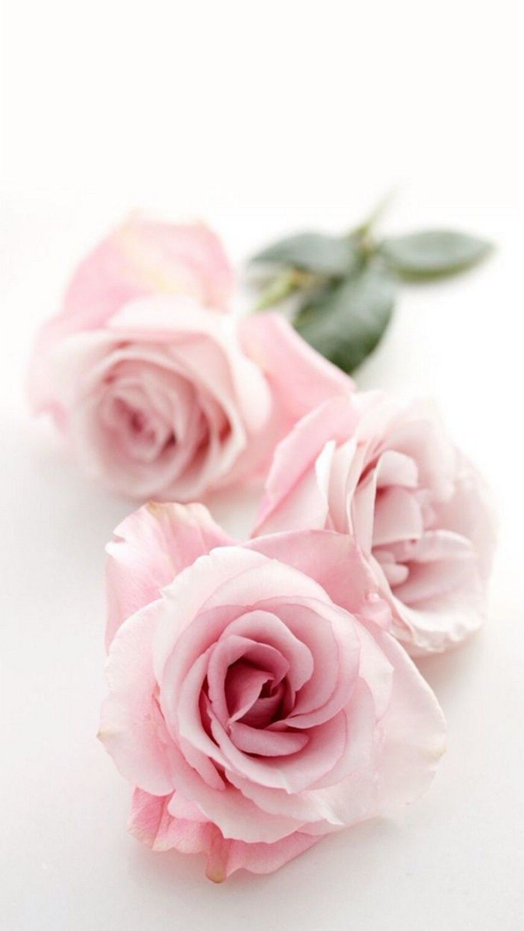 Cute Girly Flower Wallpapers Top Free Cute Girly Flower