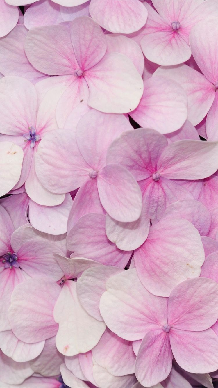 1024x768 Pink Flowers Wallpaper 11 Background