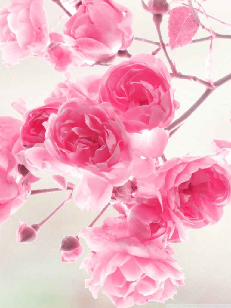 2560x1600 Cute Flower Wallpaper Backgrounds Gallery For Fl