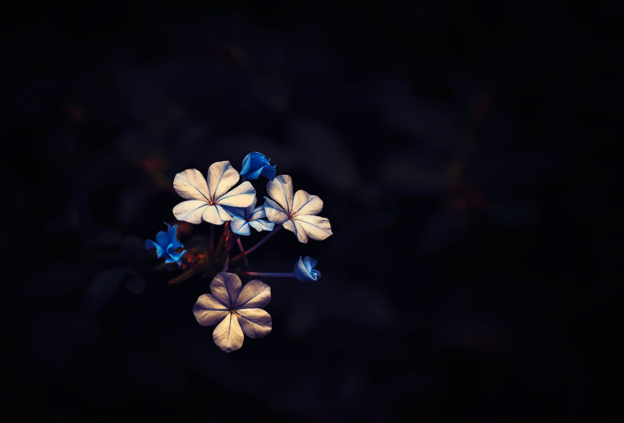 Dark Hd Flowers Wallpapers Top Free Dark Hd Flowers Backgrounds Wallpaperaccess