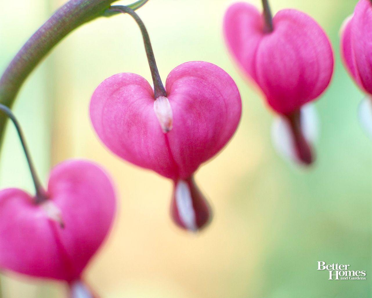 1282x1027 Flower Valentines Day Wallpaper For DesktopOffice Ink Blog