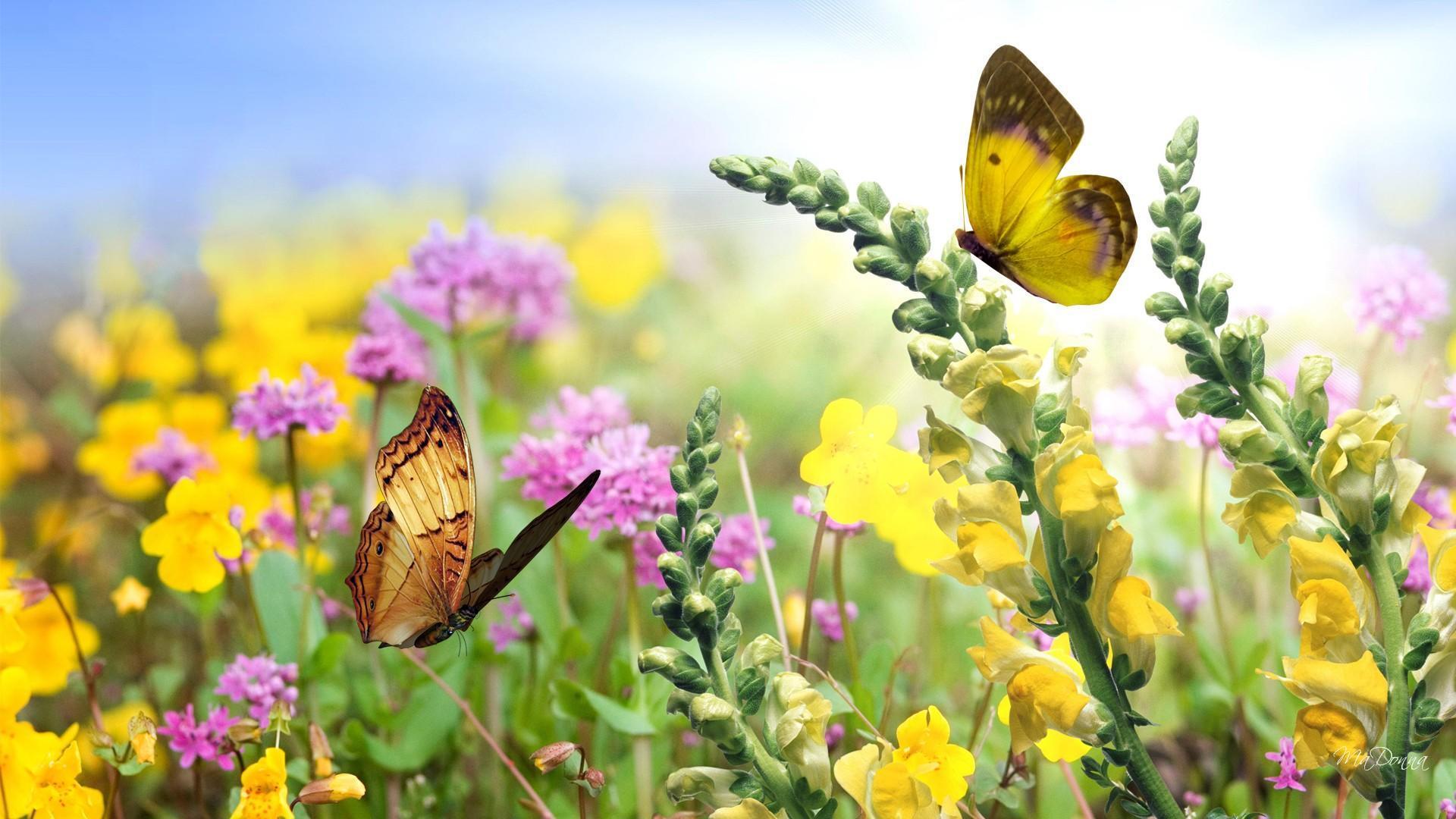 1920x1080 hình nền vườn bướm mùa hè vườn hình nền 1080p - A