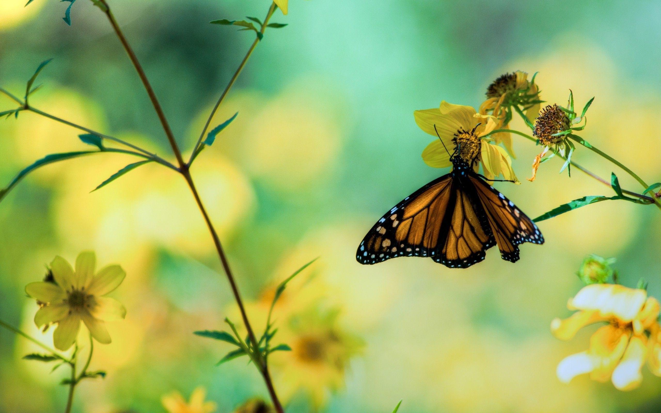 Butterfly Garden Wallpapers Top Free Butterfly Garden