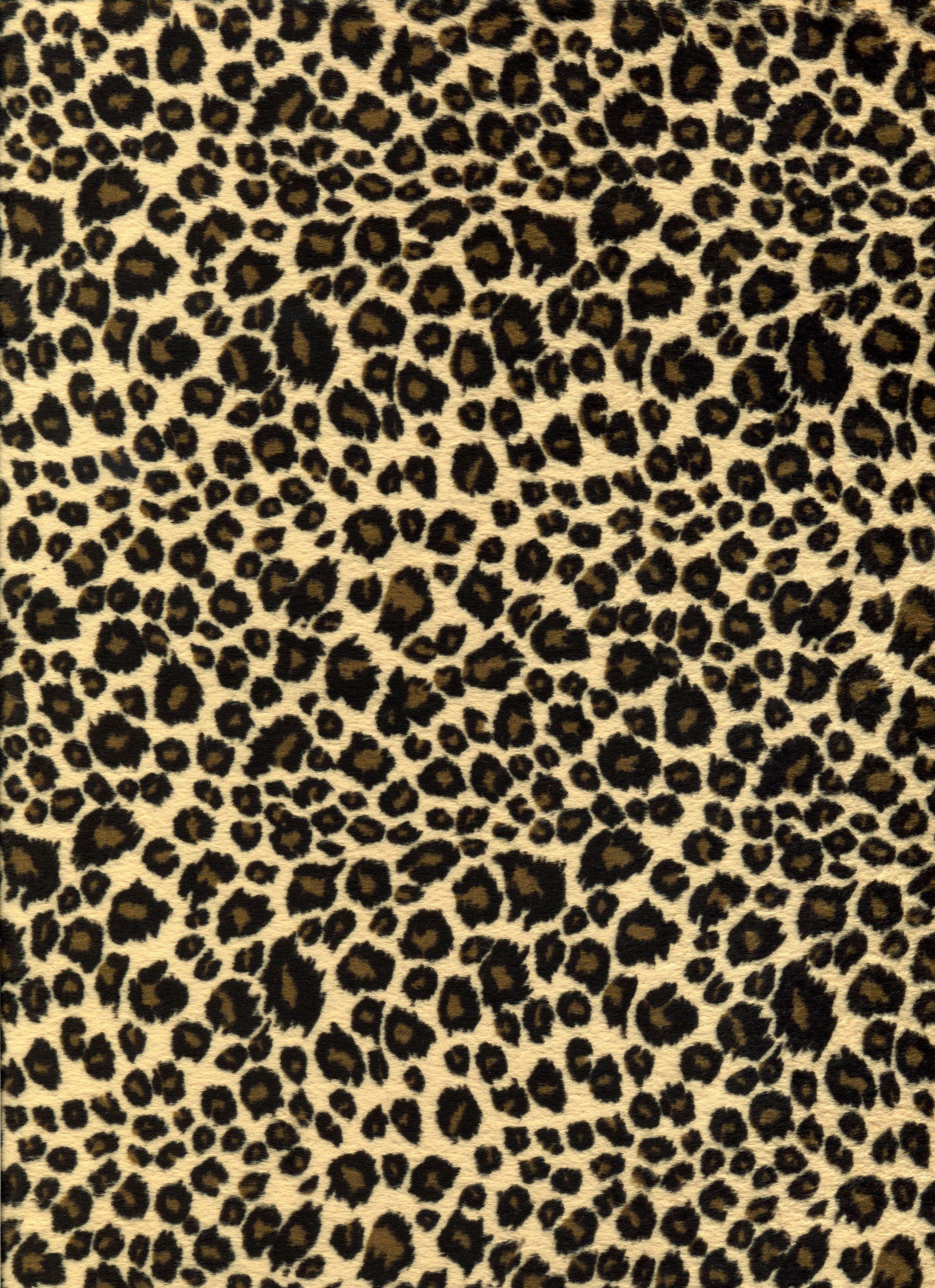 Cheetah Print Wallpapers Top Free Cheetah Print Backgrounds Wallpaperaccess