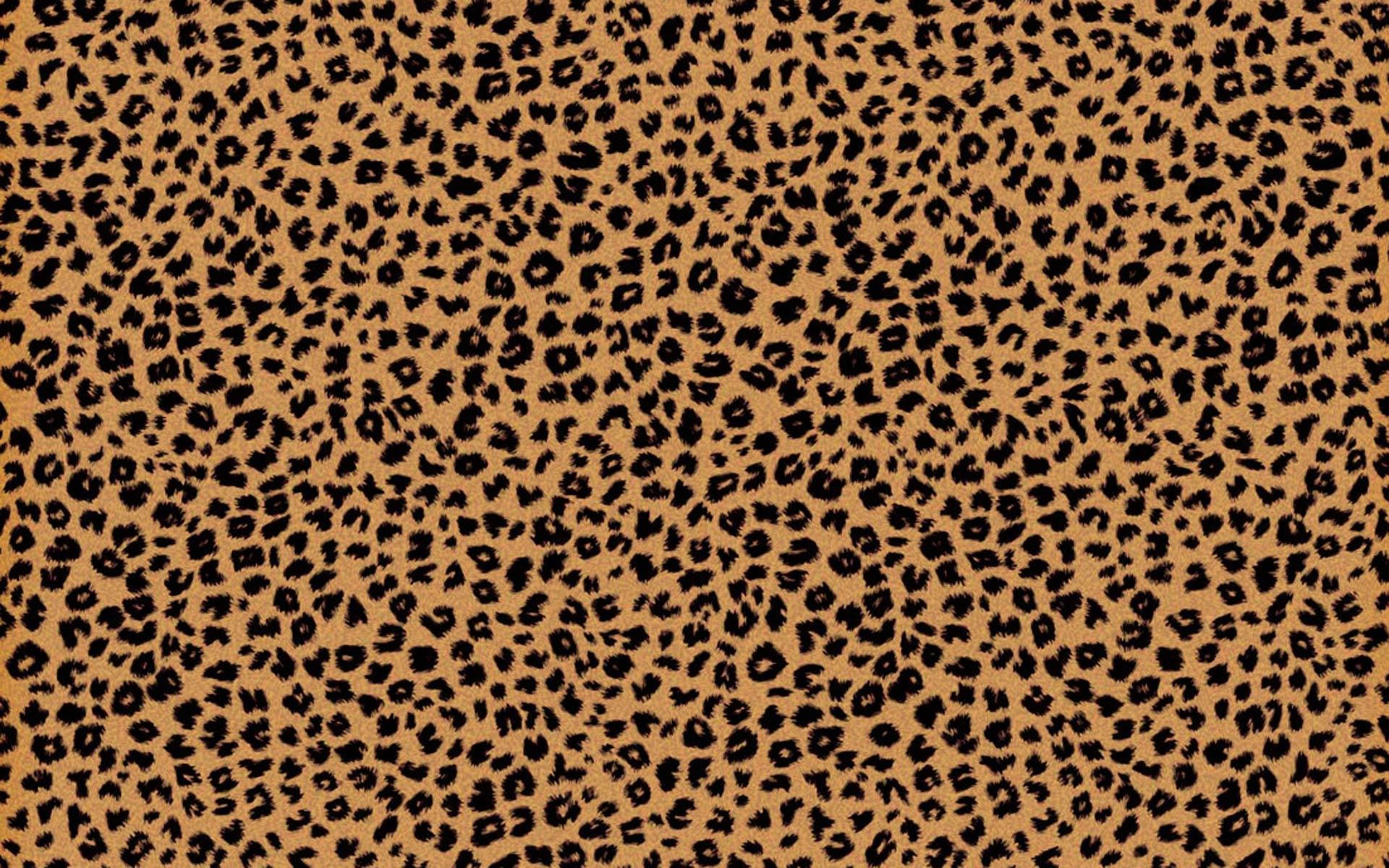 1920x1200 Cheetah nền