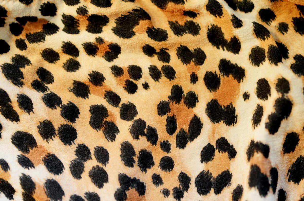 1200x795 Tải xuống miễn phí hình nền máy tính in cheetah [1200x795]