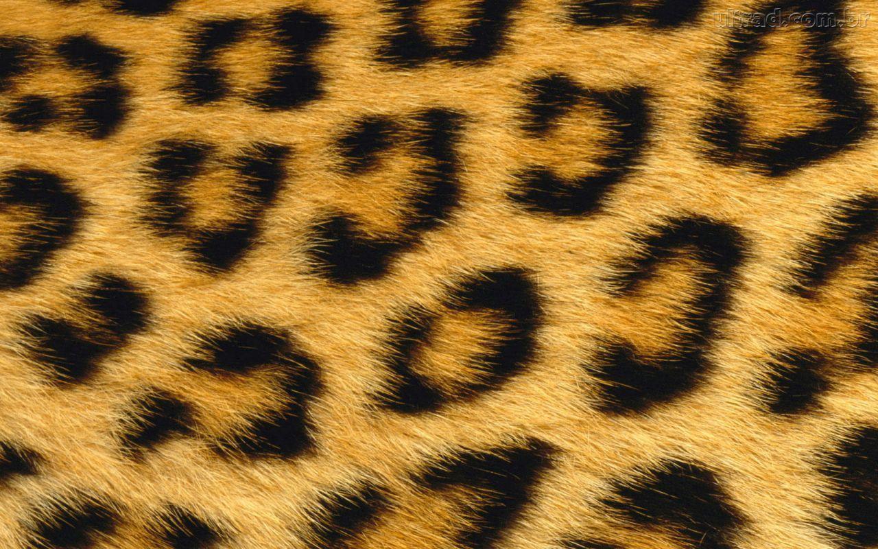 1280x800 Leopard Print Hình nền động vật HD tự nhiên cho máy tính để bàn