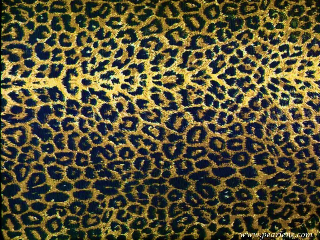 1024x768 Tải xuống 15 Hình nền In Cheetah Miễn phí.  Hình nền HD miễn phí
