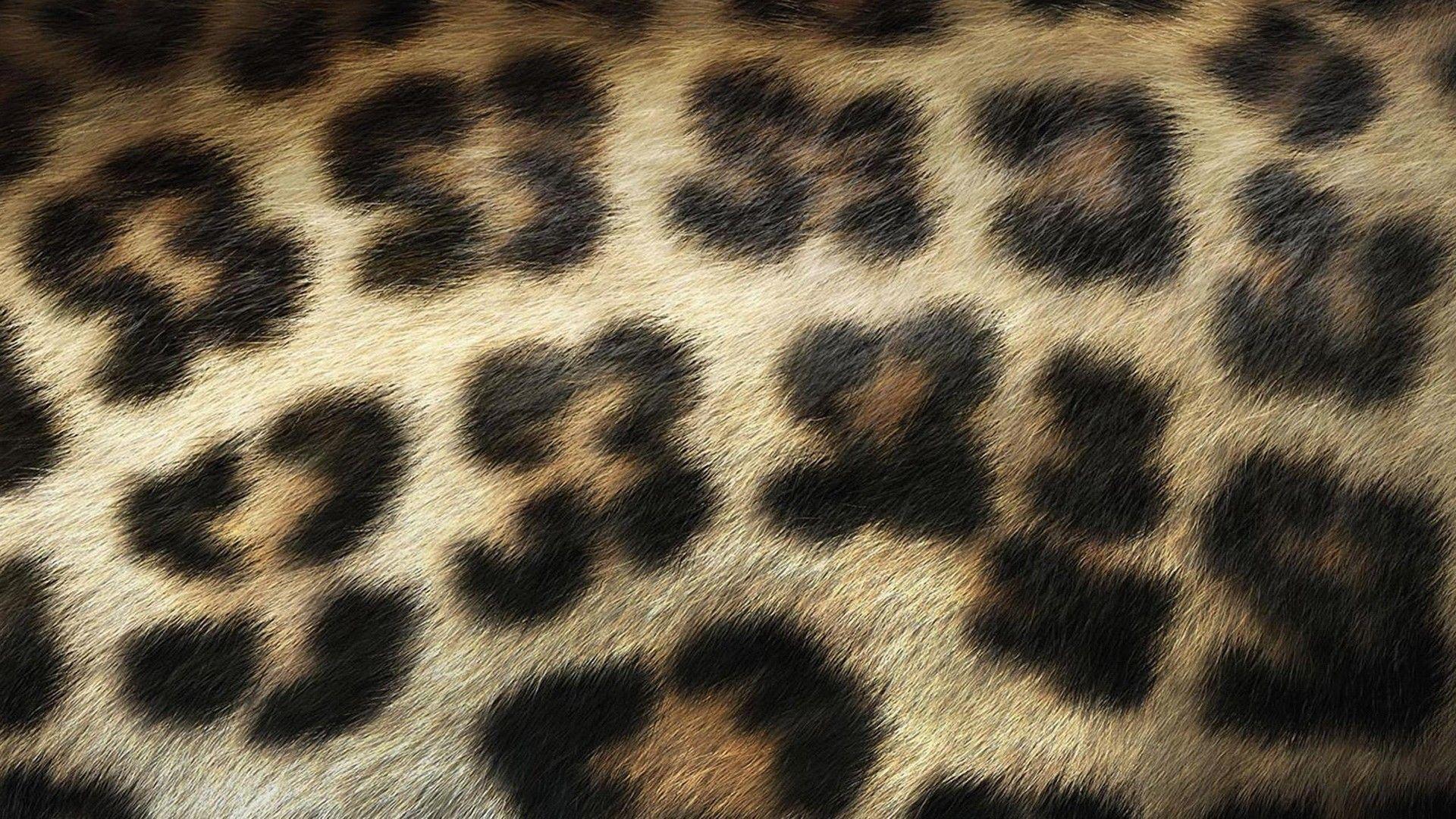 1920x1080 Leopard Print Hình nền HD