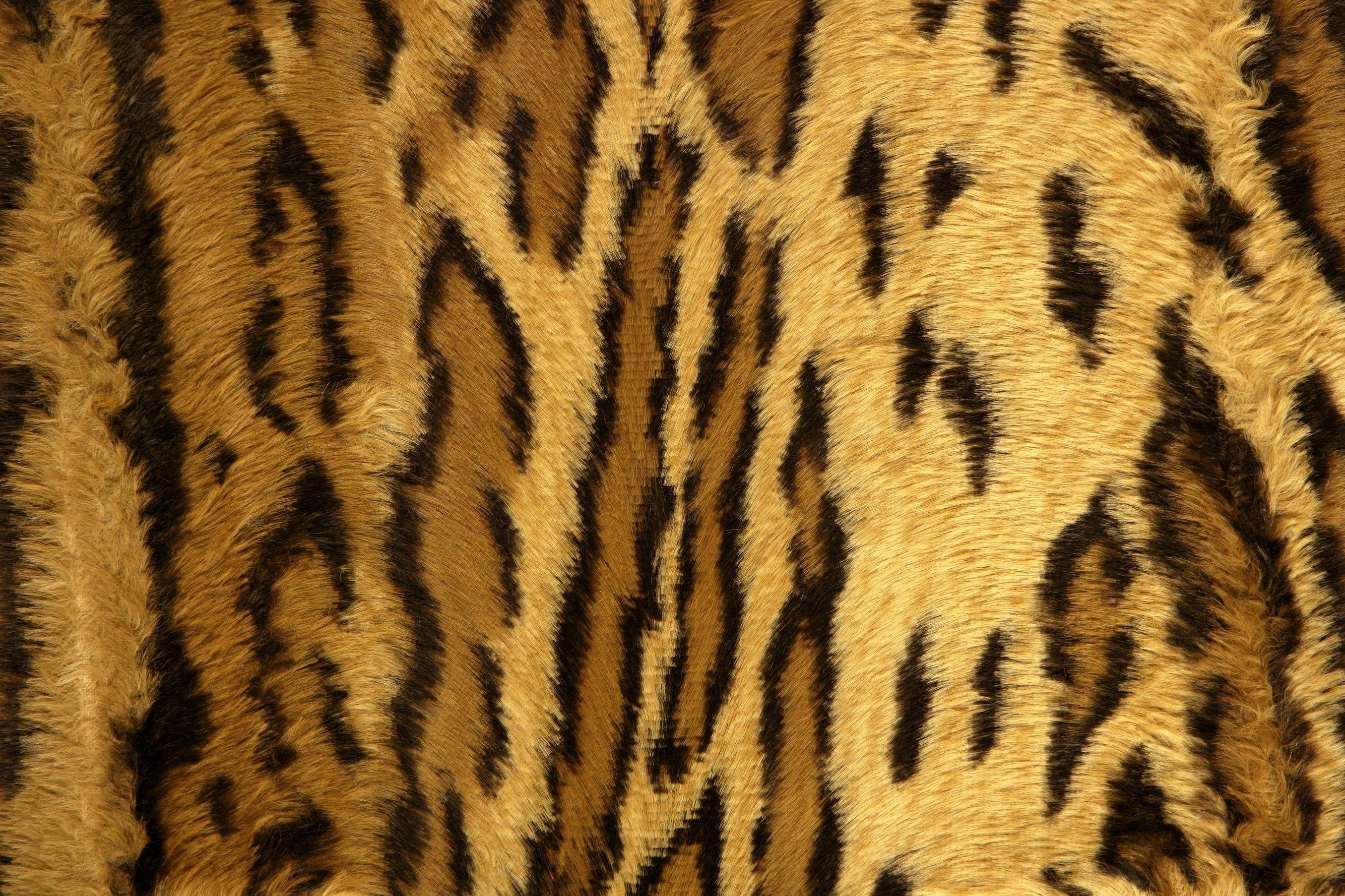 2711x1807 Wild Lifes Africa Cheetah Print