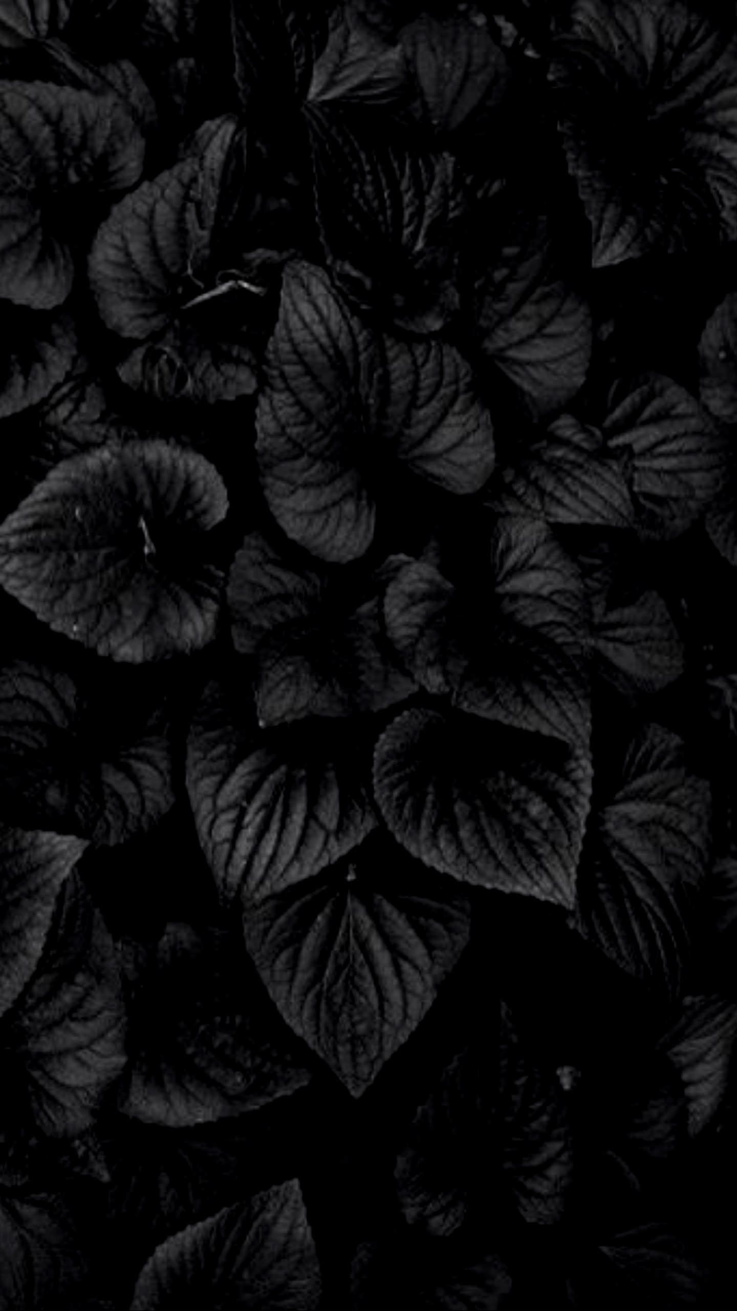 Dark Hd Flowers Wallpapers Top Free Dark Hd Flowers Backgrounds