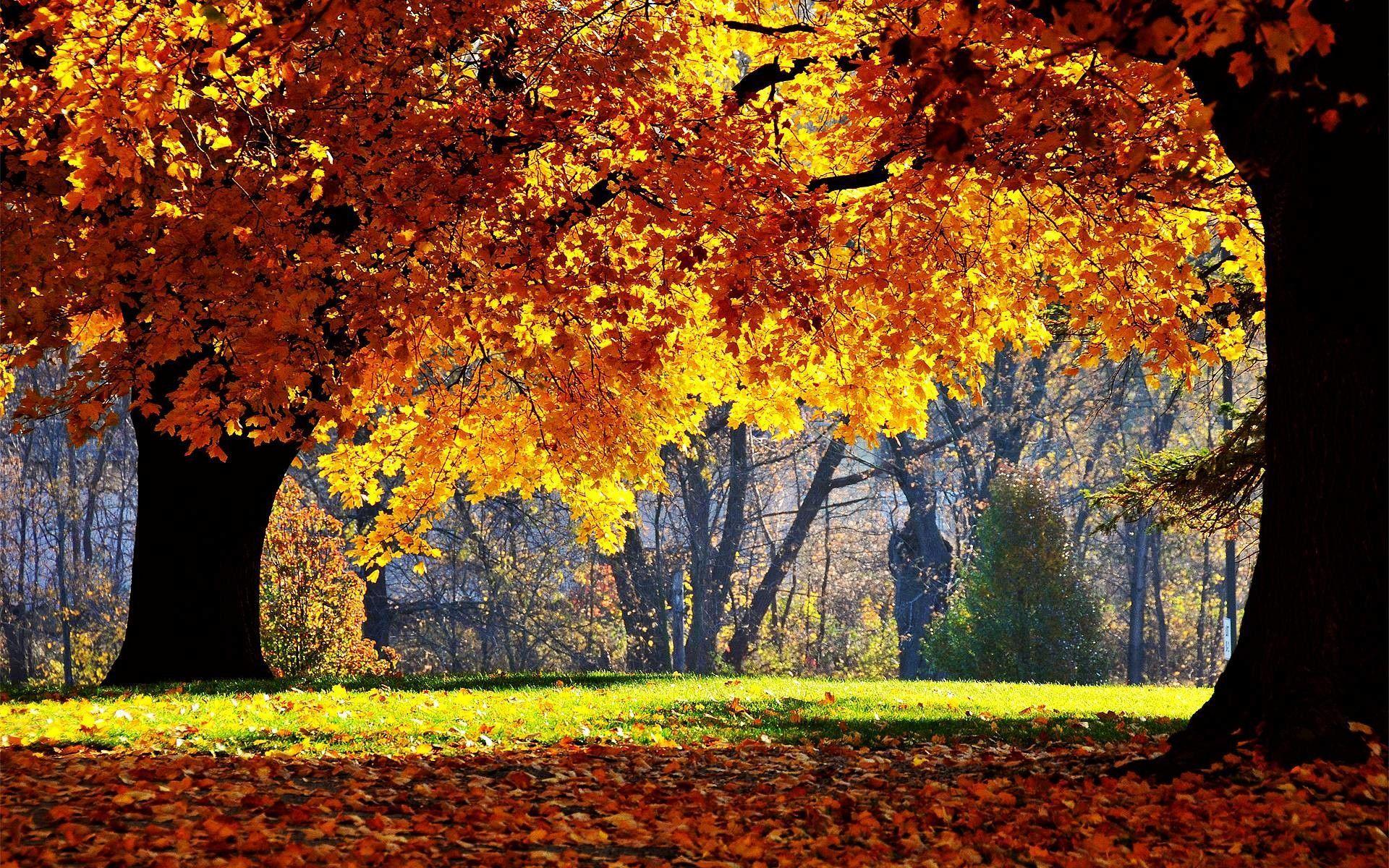 Autumn Computer Wallpapers - Top Free Autumn Computer Backgrounds -  WallpaperAccess