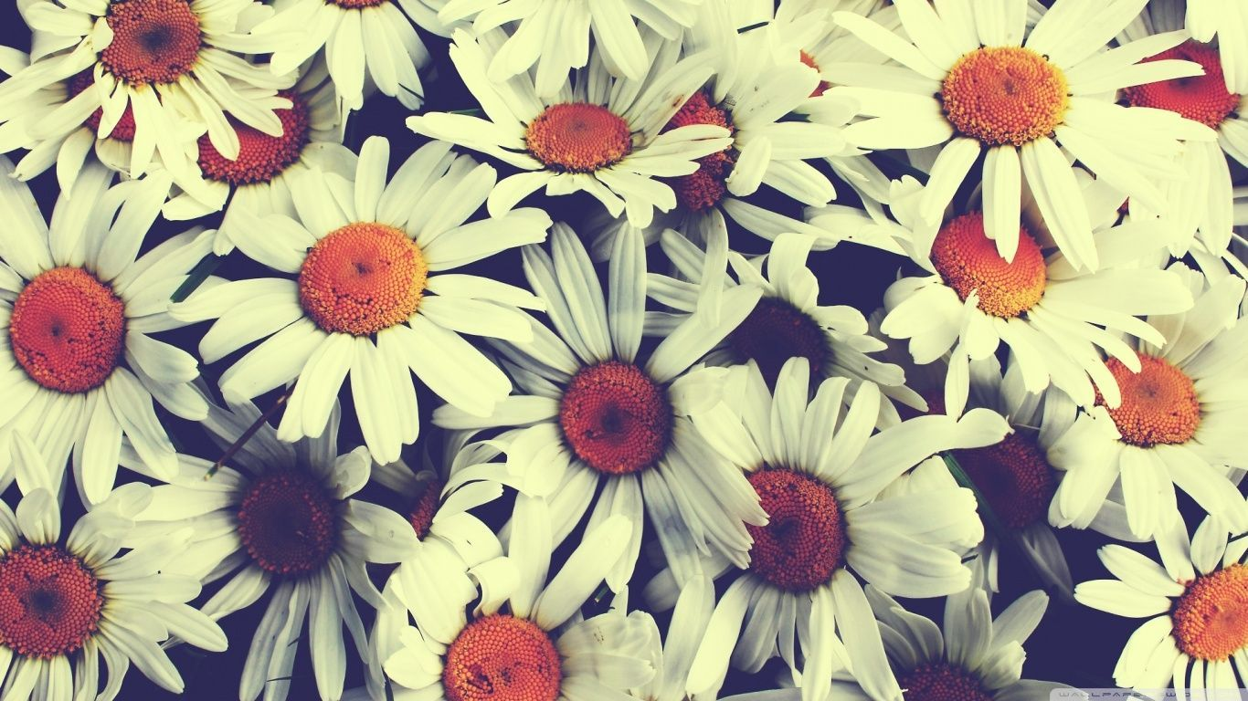 Beautiful Vintage Flower Wallpapers Top Free Beautiful Vintage