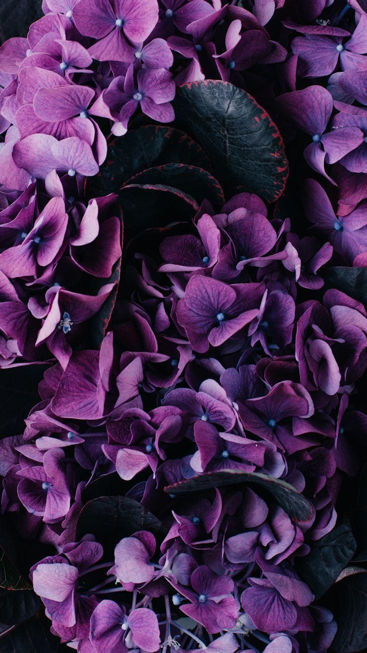 Vintage Purple Iphone Wallpapers Top Free Vintage Purple Iphone
