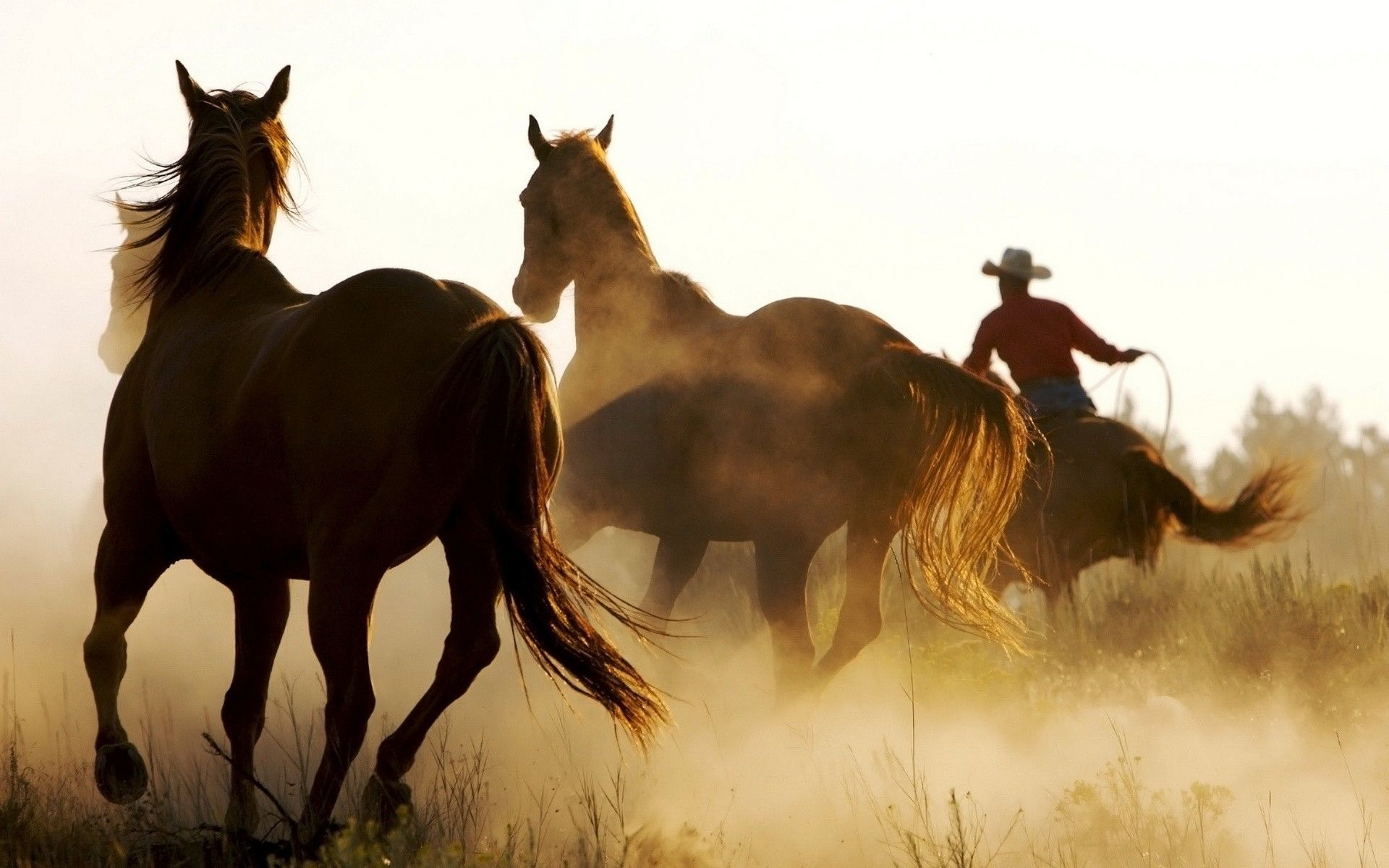 Western Horse Desktop Wallpapers Top Free Western Horse Desktop Backgrounds Wallpaperaccess