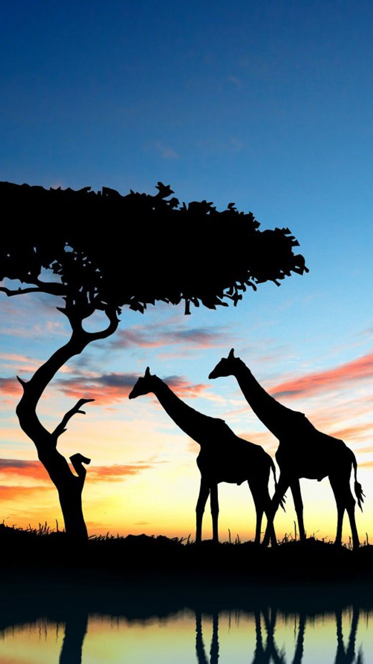 African Iphone Wallpapers Top Free African Iphone