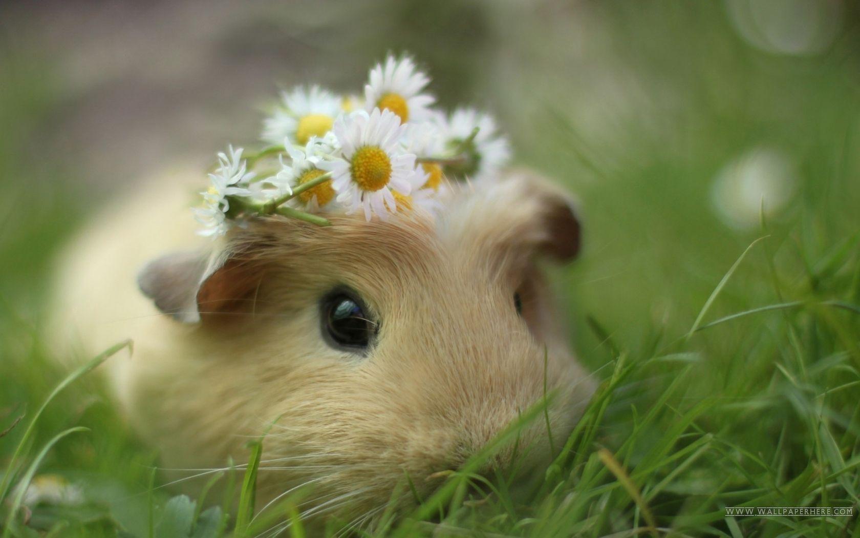 Cute Animal Desktop Wallpapers Top Free Cute Animal