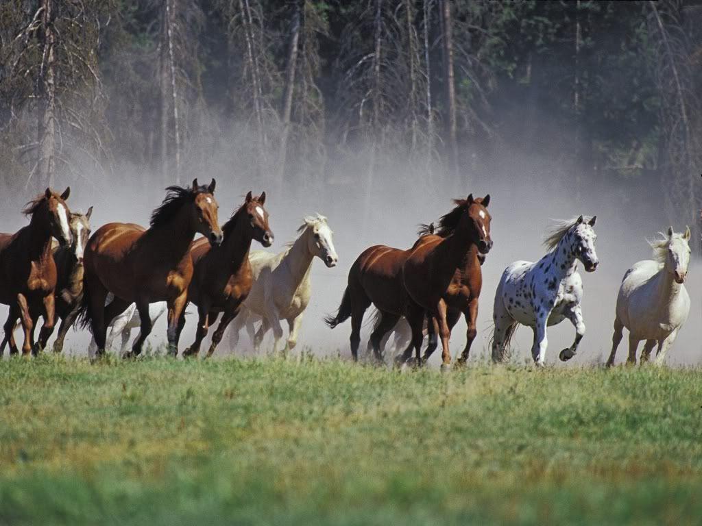 Wild Horses Desktop Wallpapers Top Free Wild Horses Desktop Backgrounds Wallpaperaccess