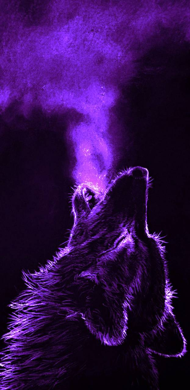 Purple Wolf Wallpapers Top Free Purple Wolf Backgrounds Wallpaperaccess