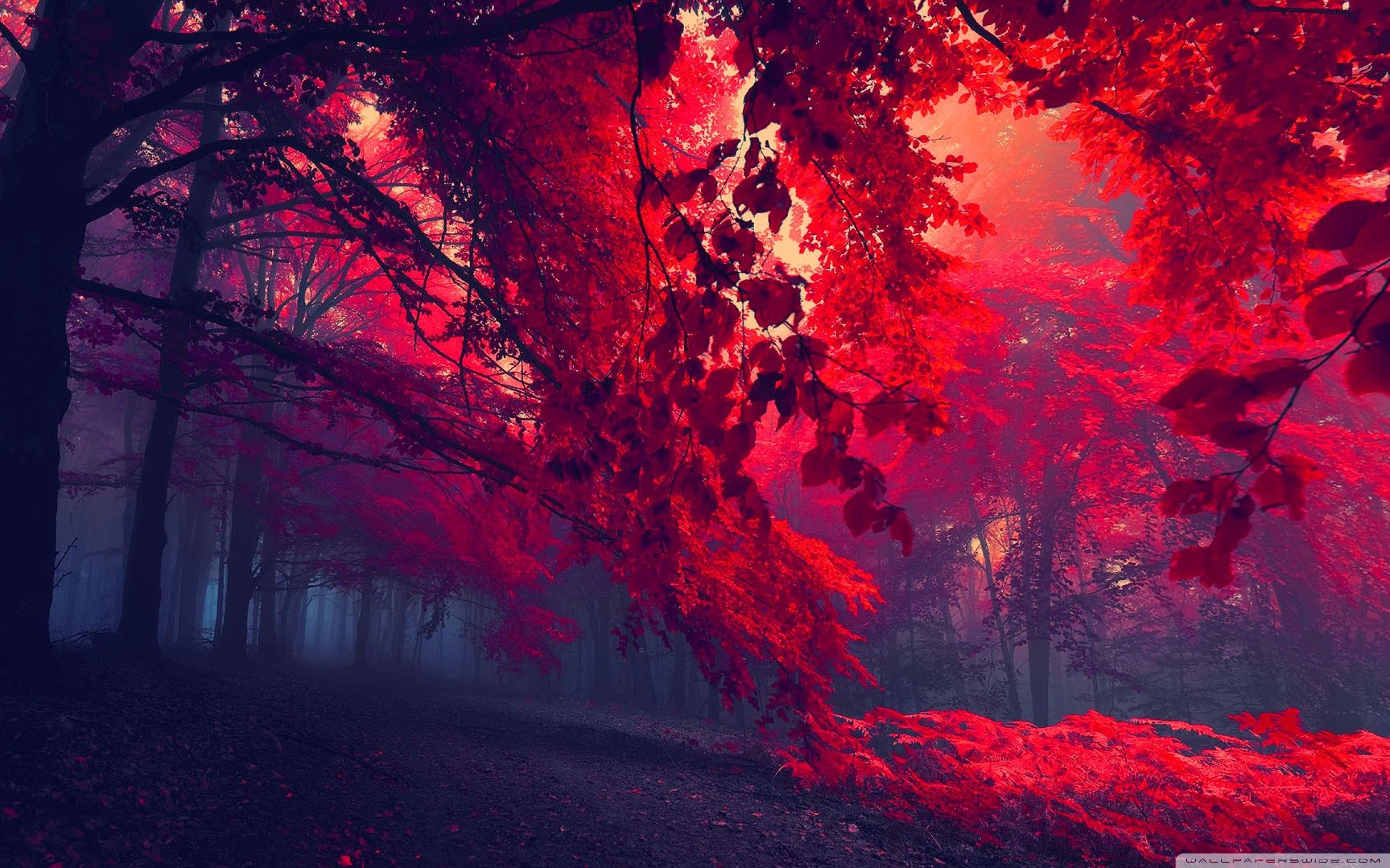 Red forest wallpapers top free red forest backgrounds - 4k forest wallpaper ...