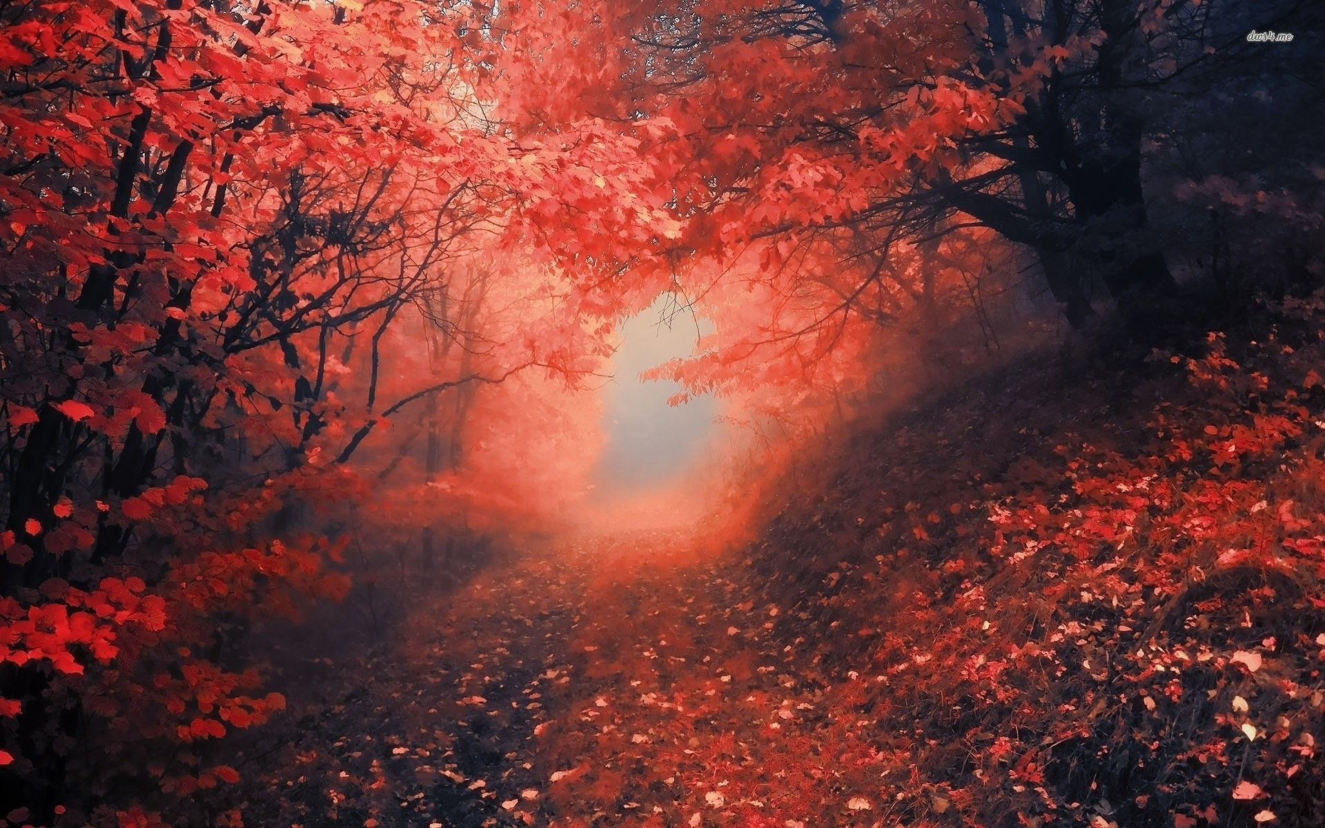 Red Forest Wallpapers - Top Free Red Forest Backgrounds ...