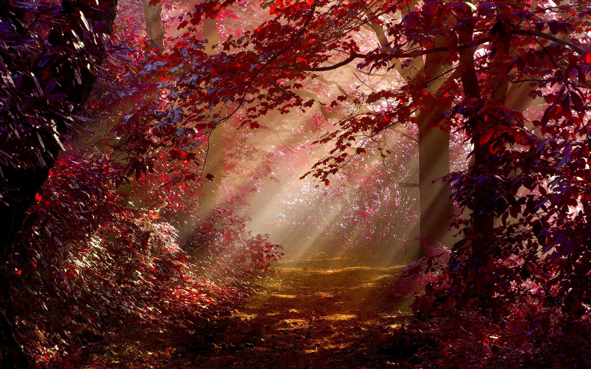 Forest Forests Carpet Trees Nature Green Leaves Red Autumn Forest