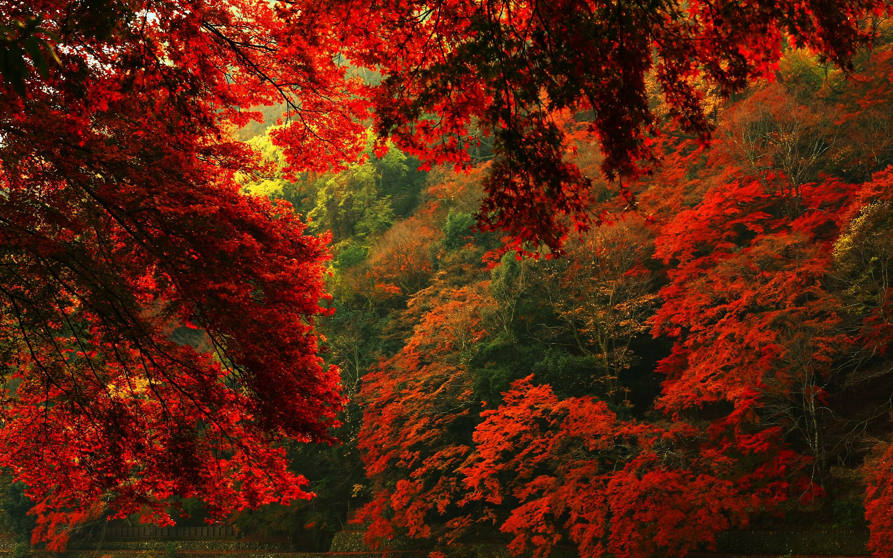 Anime girl forest autumn tree red leaf road wallpaper x