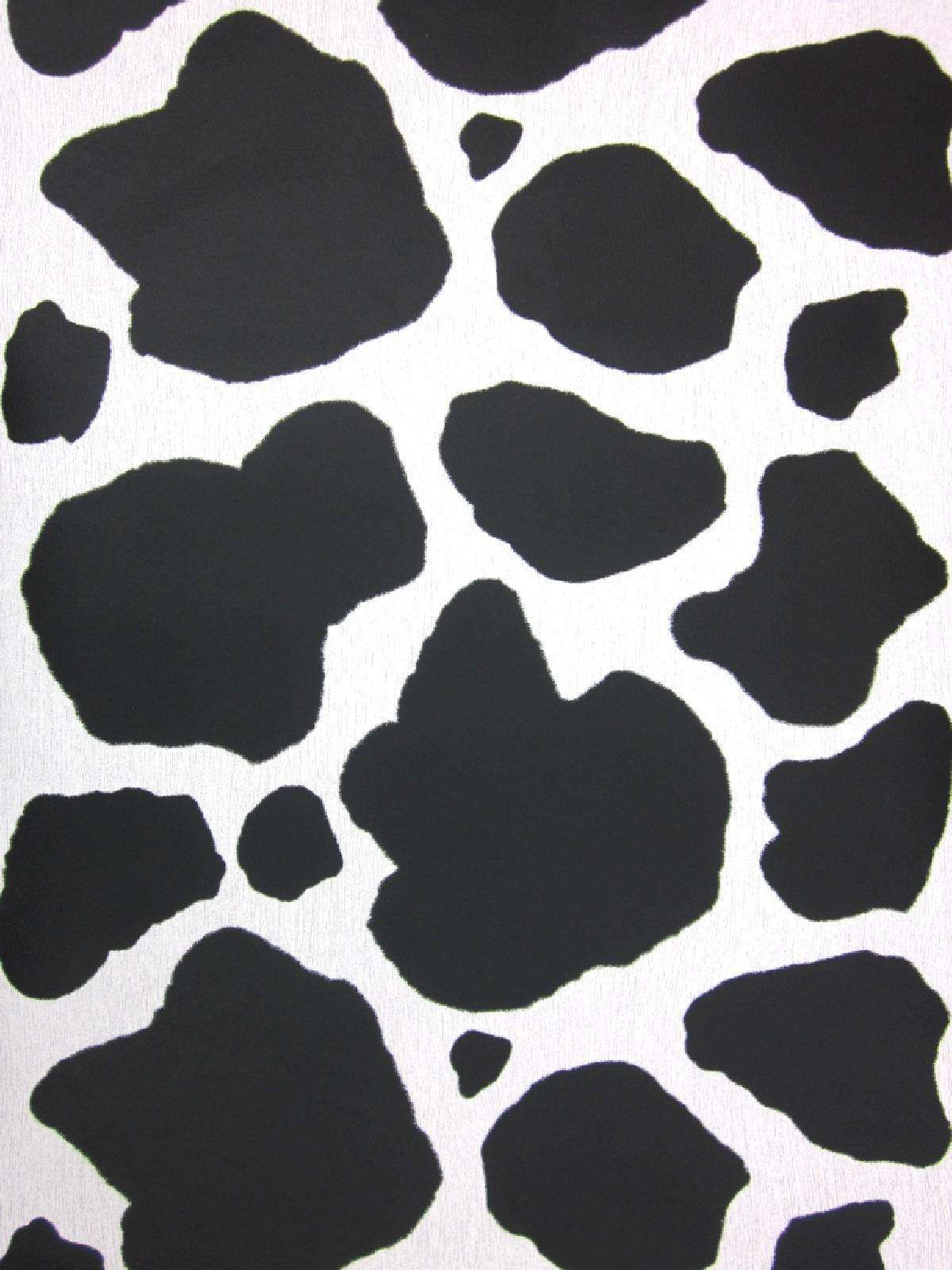Cow Print Wallpapers Top Free Cow Print Backgrounds