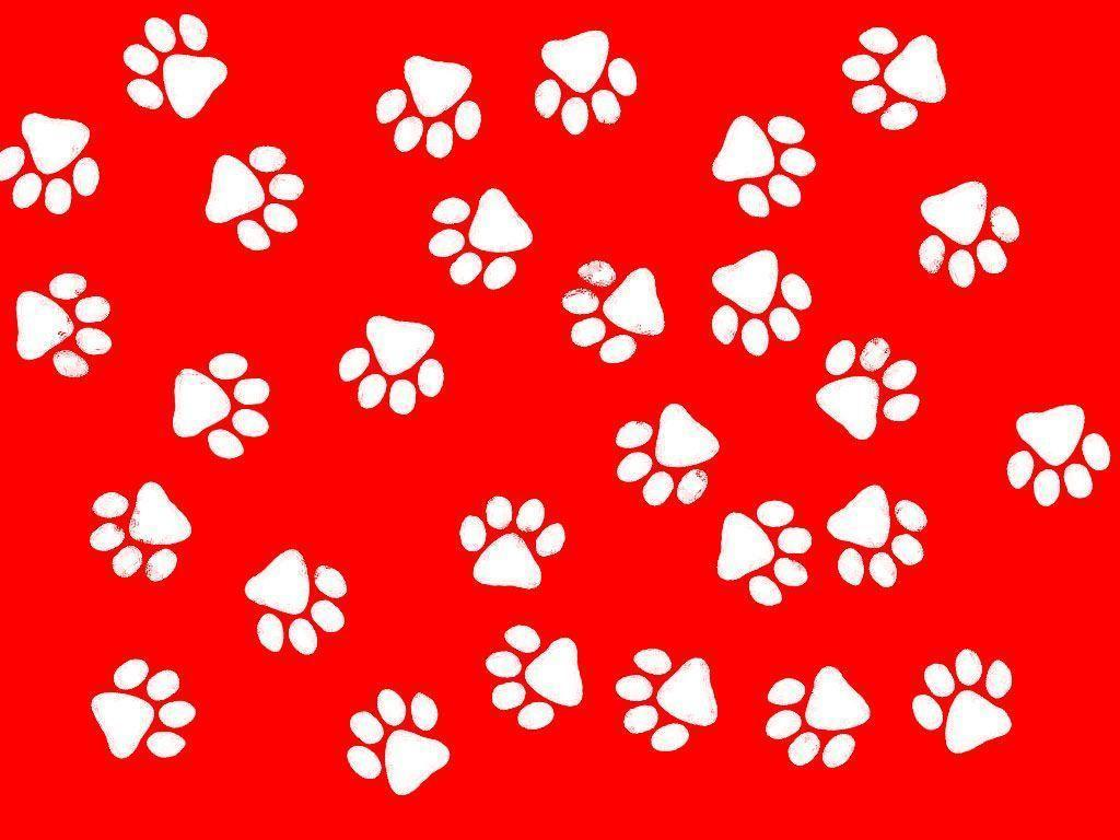Paw Print Wallpapers - Top Free Paw