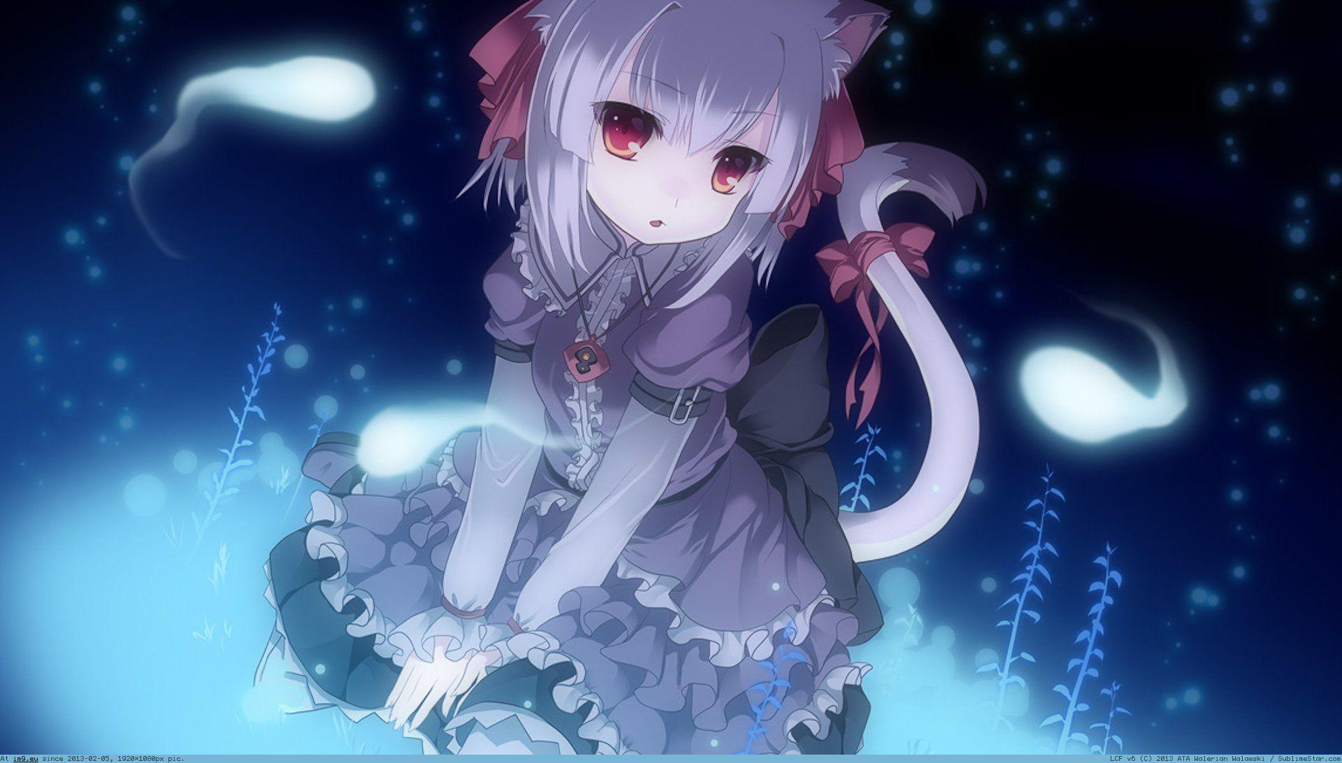 Cute Anime Cat Girl Wallpapers Top Free Cute Anime Cat Girl Backgrounds Wallpaperaccess