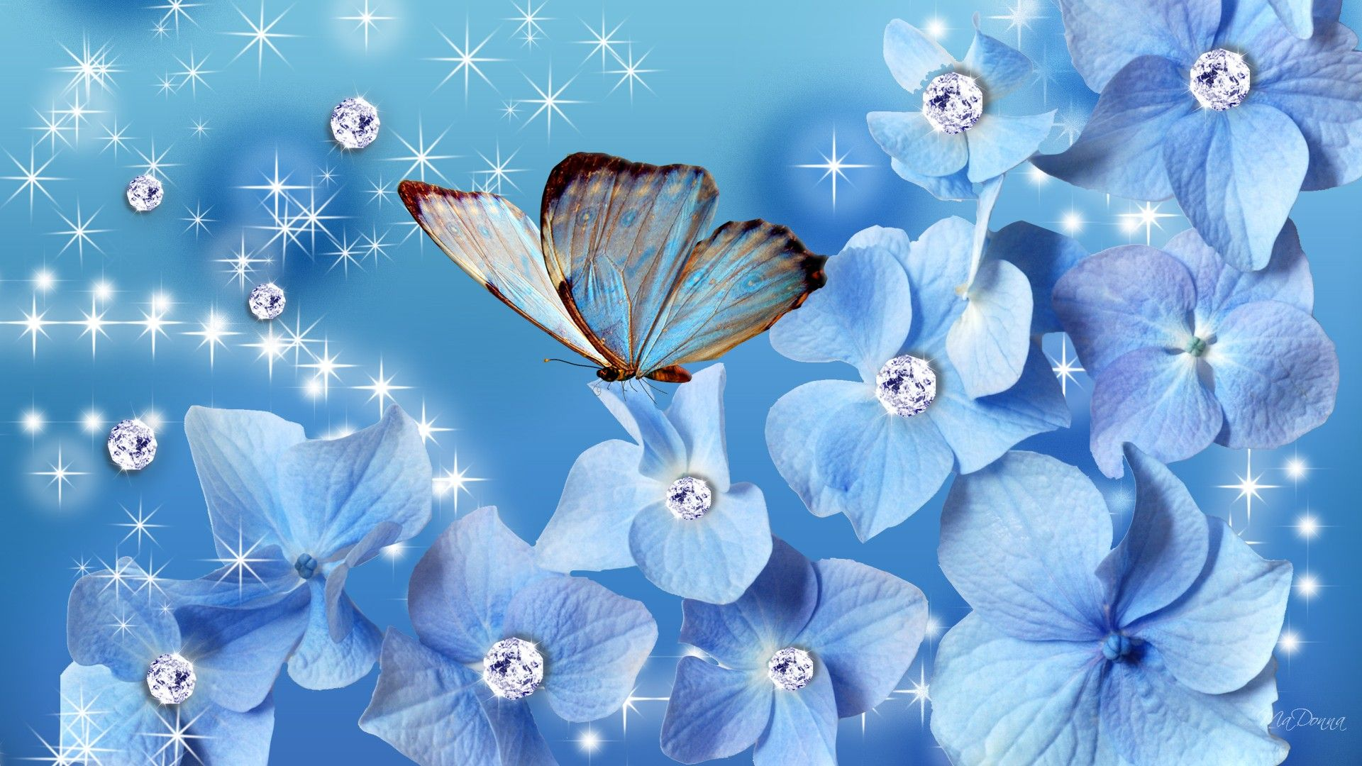 Blue Butterfly Wallpapers - Top Free Blue Butterfly ...
