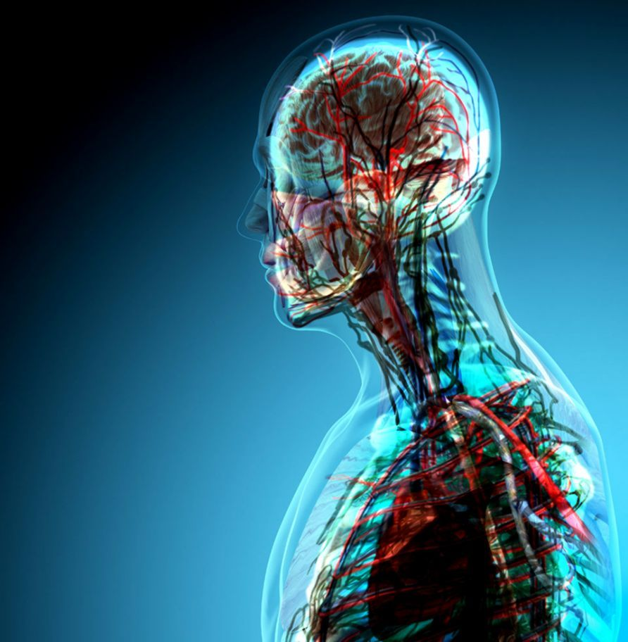 Anatomy and Physiology Wallpapers - Top Free Anatomy and ...
