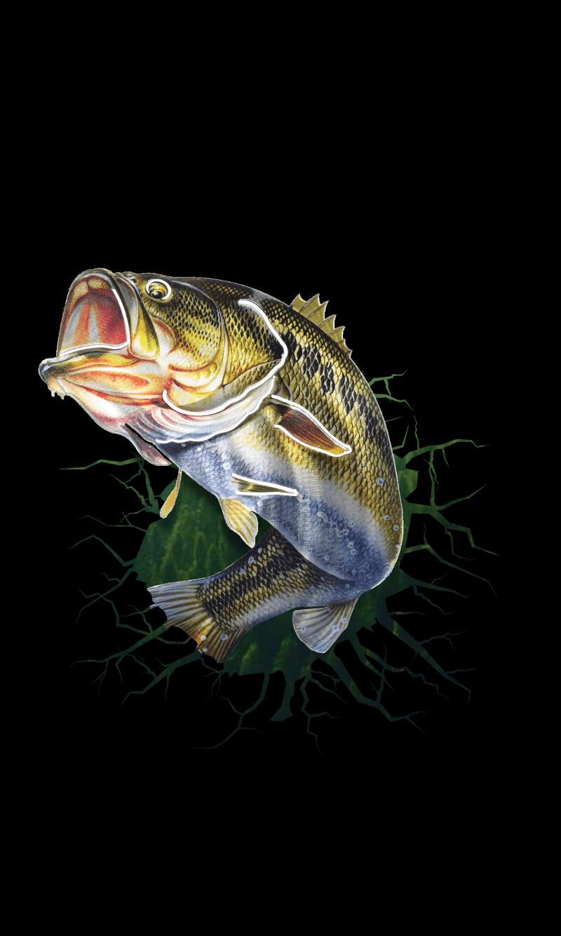Bass Fish Wallpapers Top Free Bass Fish Backgrounds Wallpaperaccess