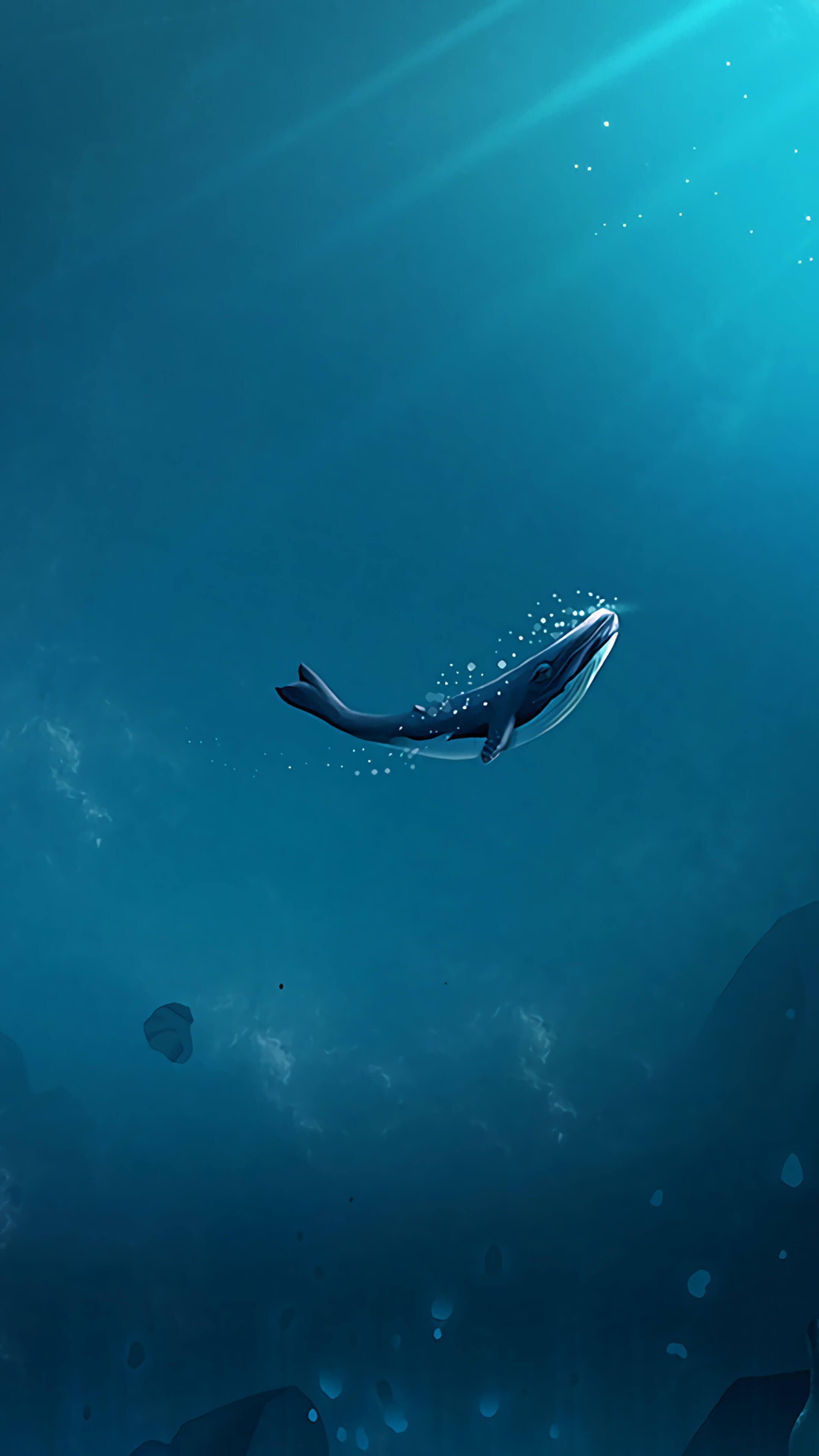 Blue Whale Wallpapers Top Free Blue Whale Backgrounds Wallpaperaccess