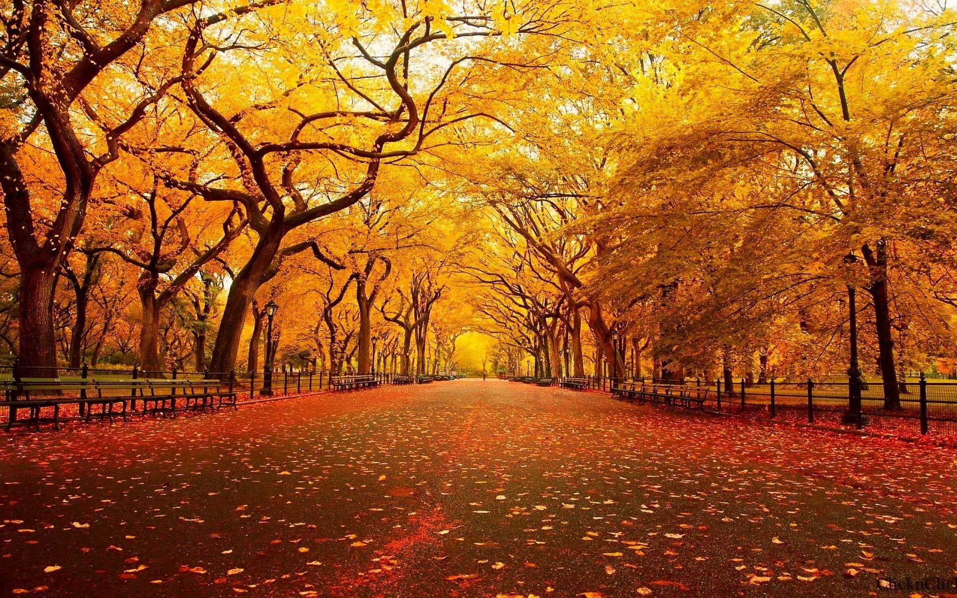 59 best free large thanksgiving wallpapers wallpaperaccess