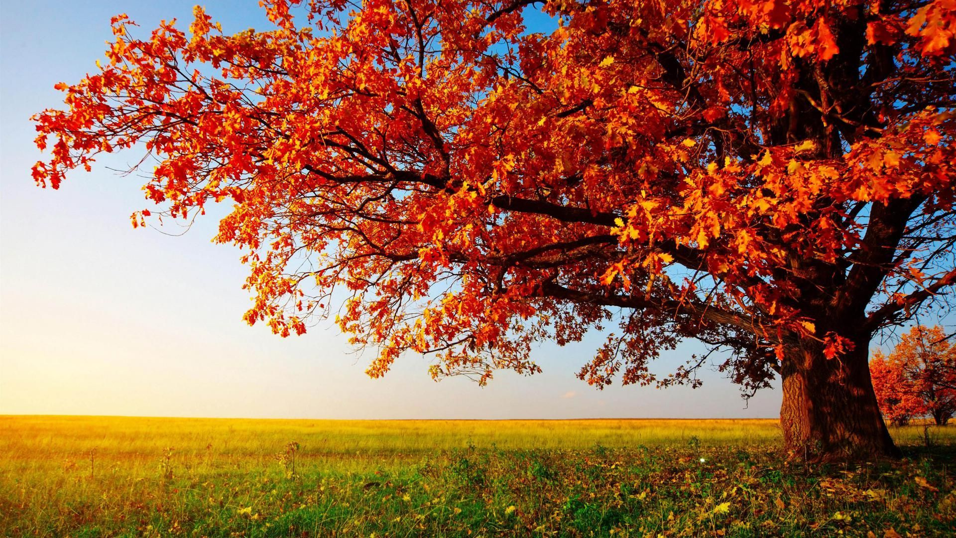 Beautiful Widescreen Desktop Wallpapers Top Free Beautiful
